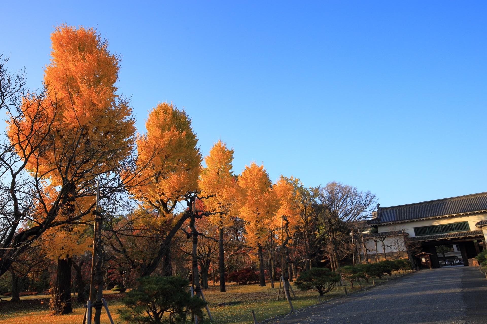 雲一つない青空を彩る煌びやかな黄色い銀杏並木