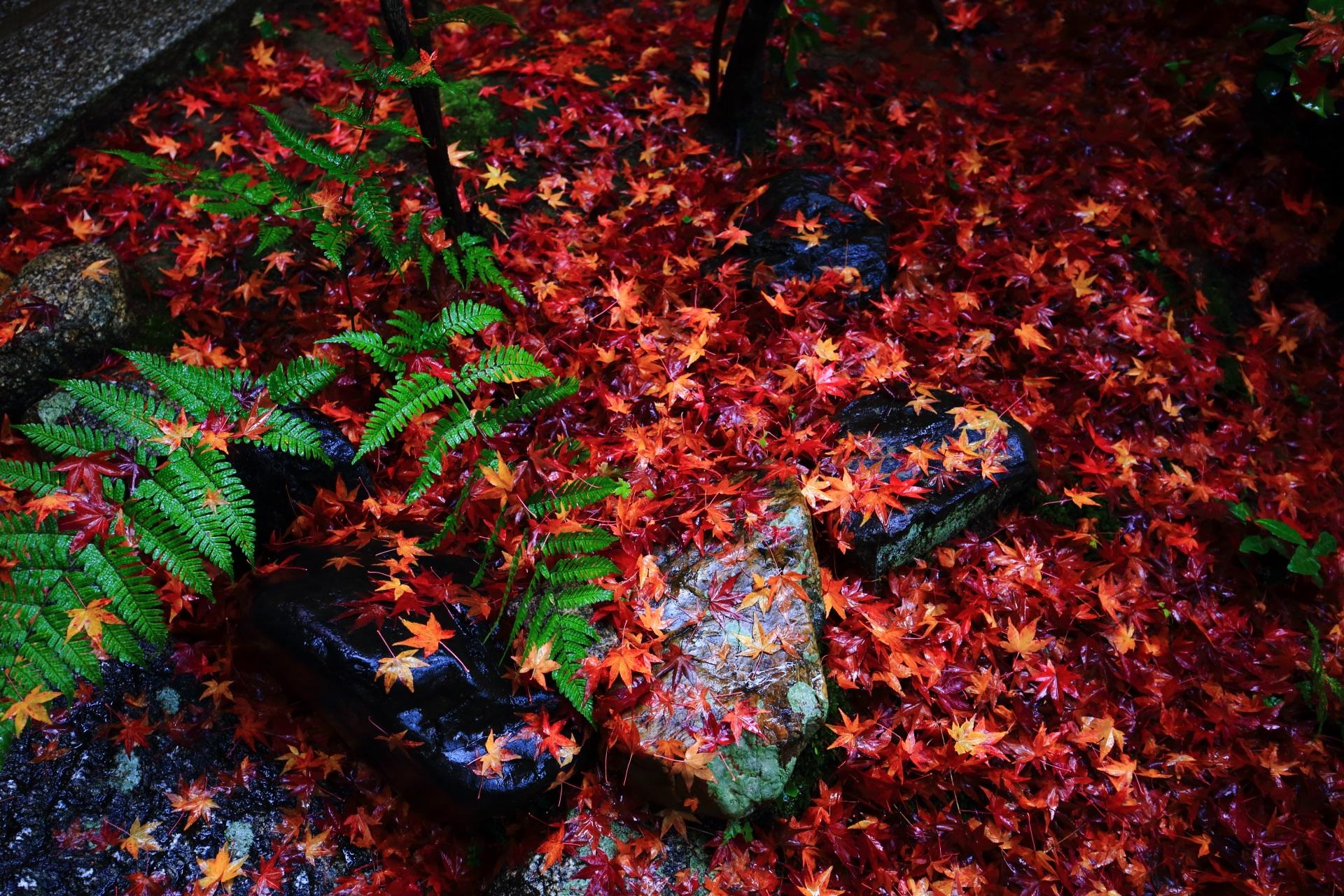 山門付近の鮮やかな色合いの散り紅葉