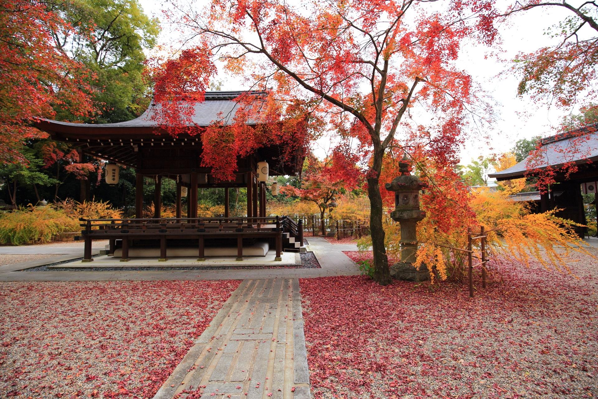 拝殿を華やぐ紅葉と散りもみじと萩