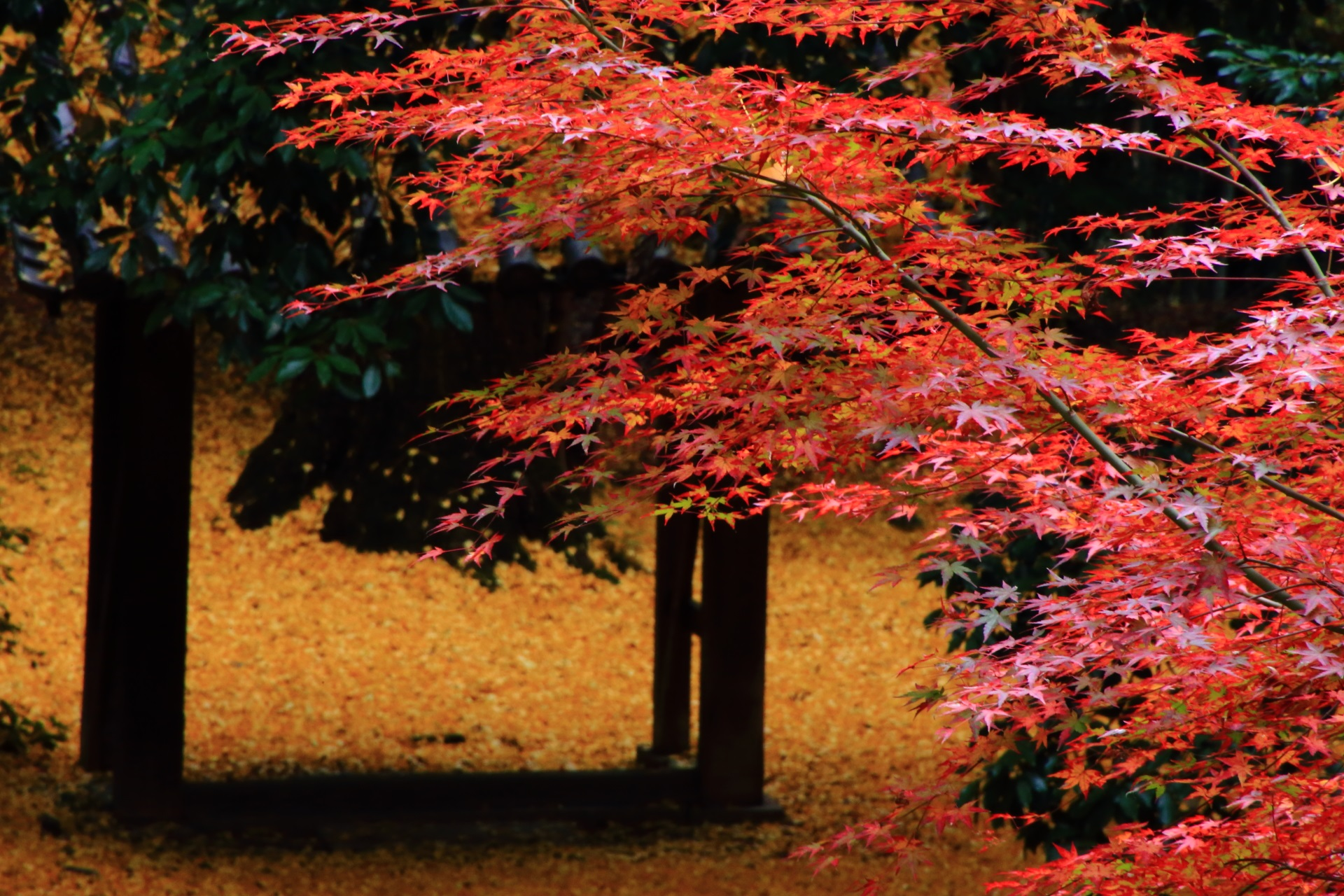 紅葉と散り銀杏の秋色のコラボ