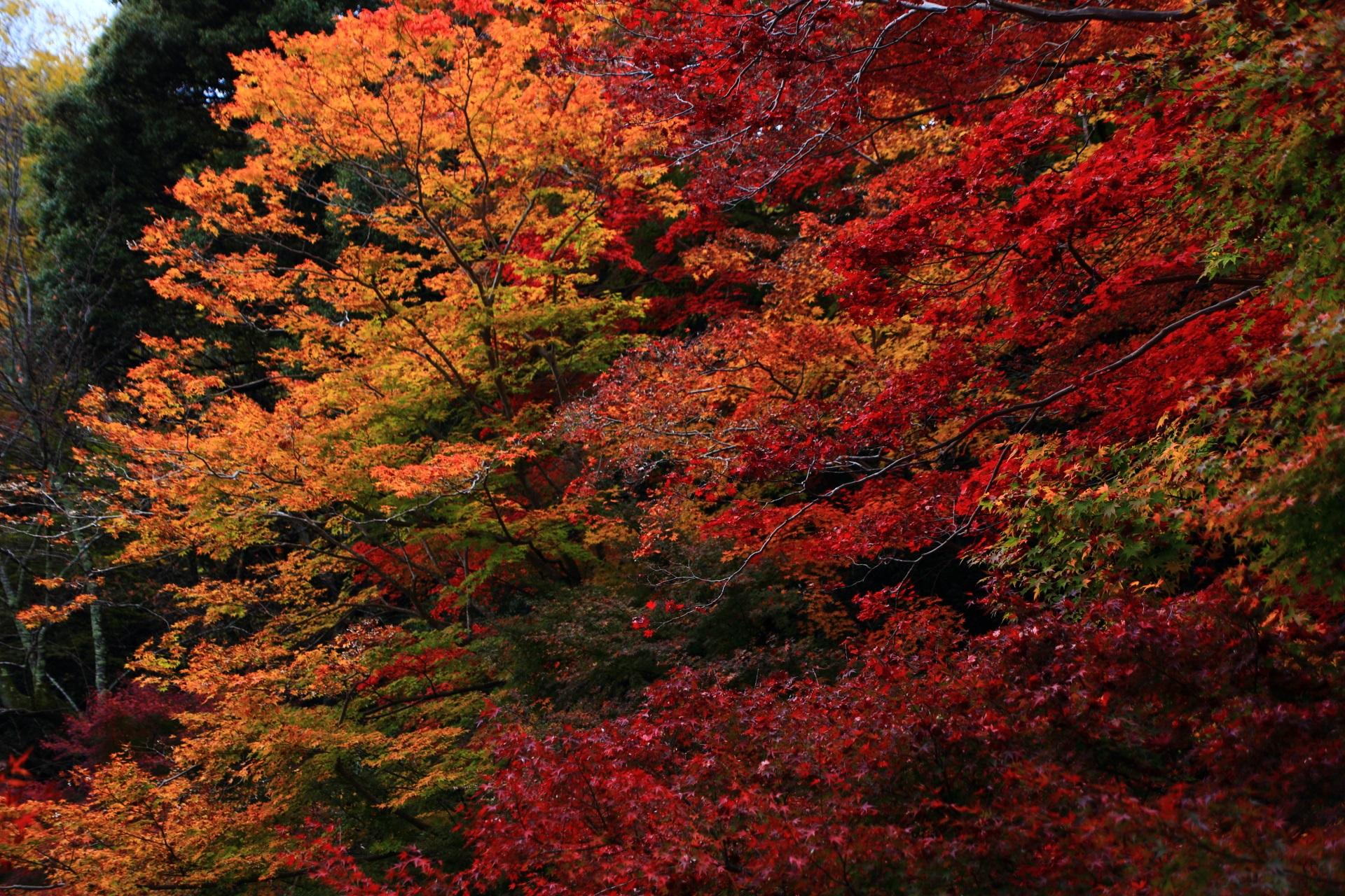 賑わう色とりどりの秋の彩り
