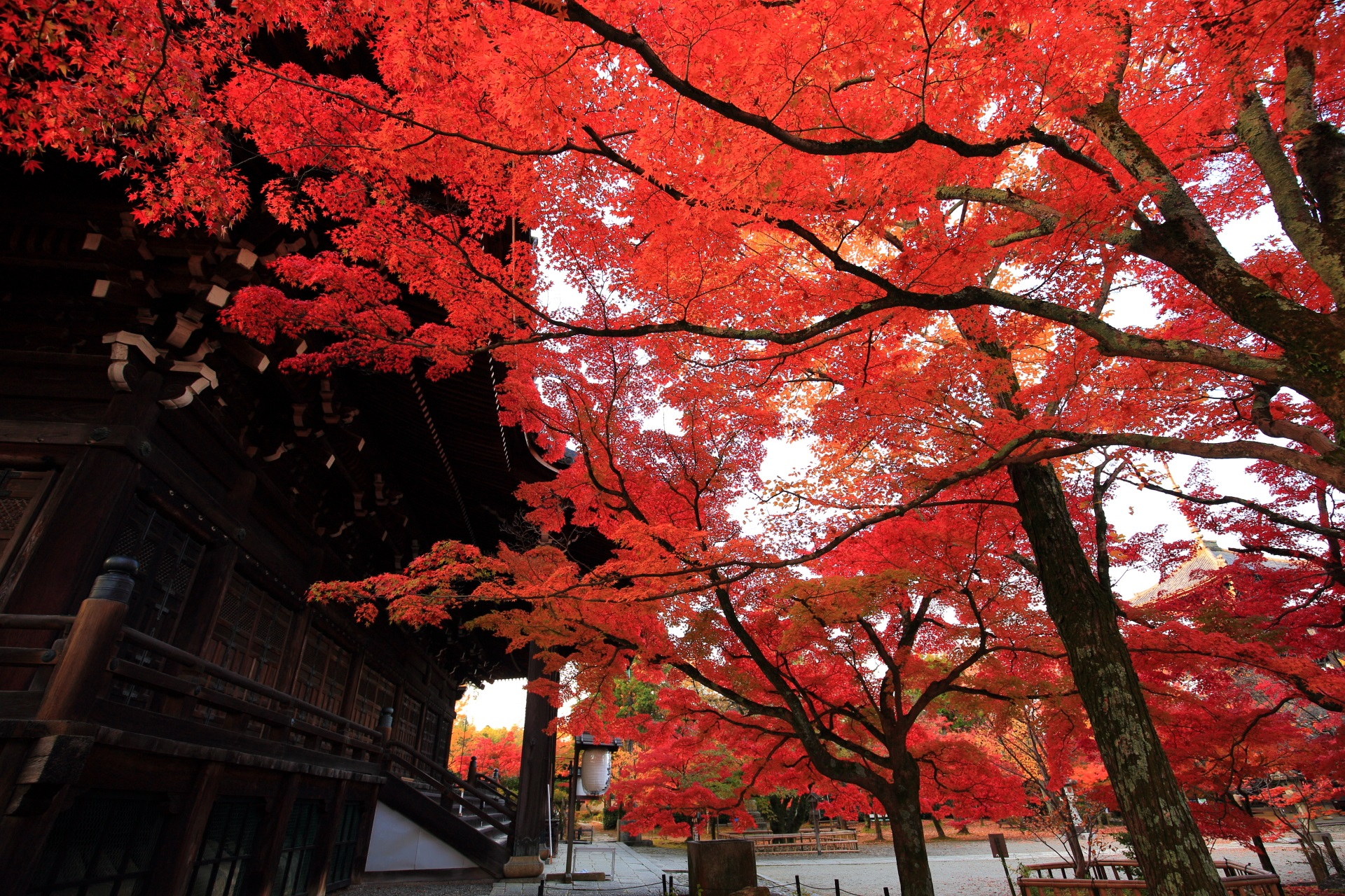 Kyoto Sinnyodo-Temple colored leaves