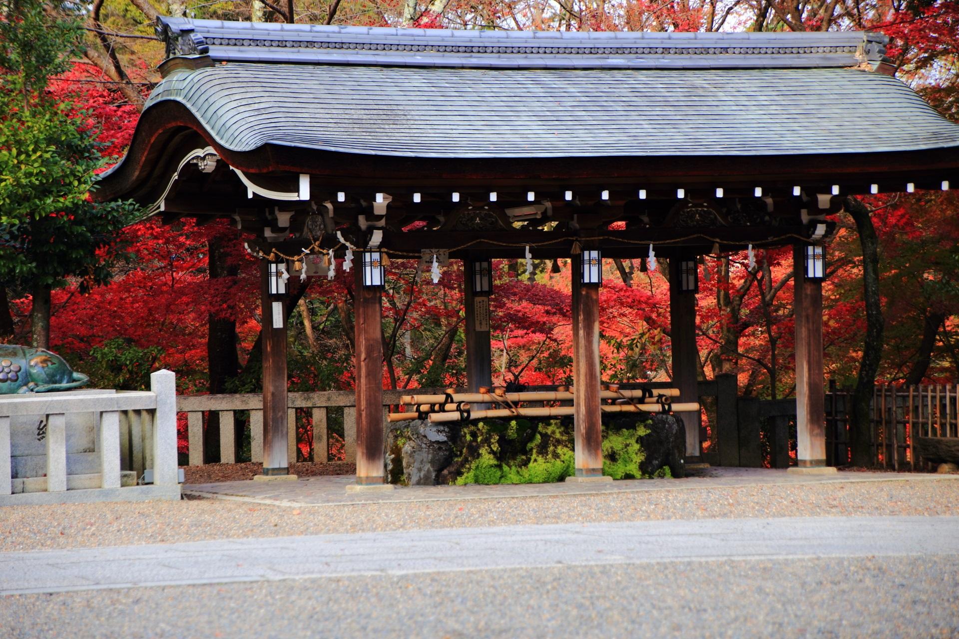 長岡天満宮の鮮やかな紅葉が華やぐ手水舎