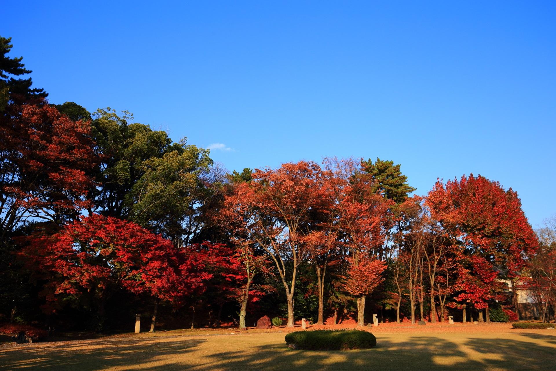 二条城の夕陽に照らされる鮮やかな紅葉