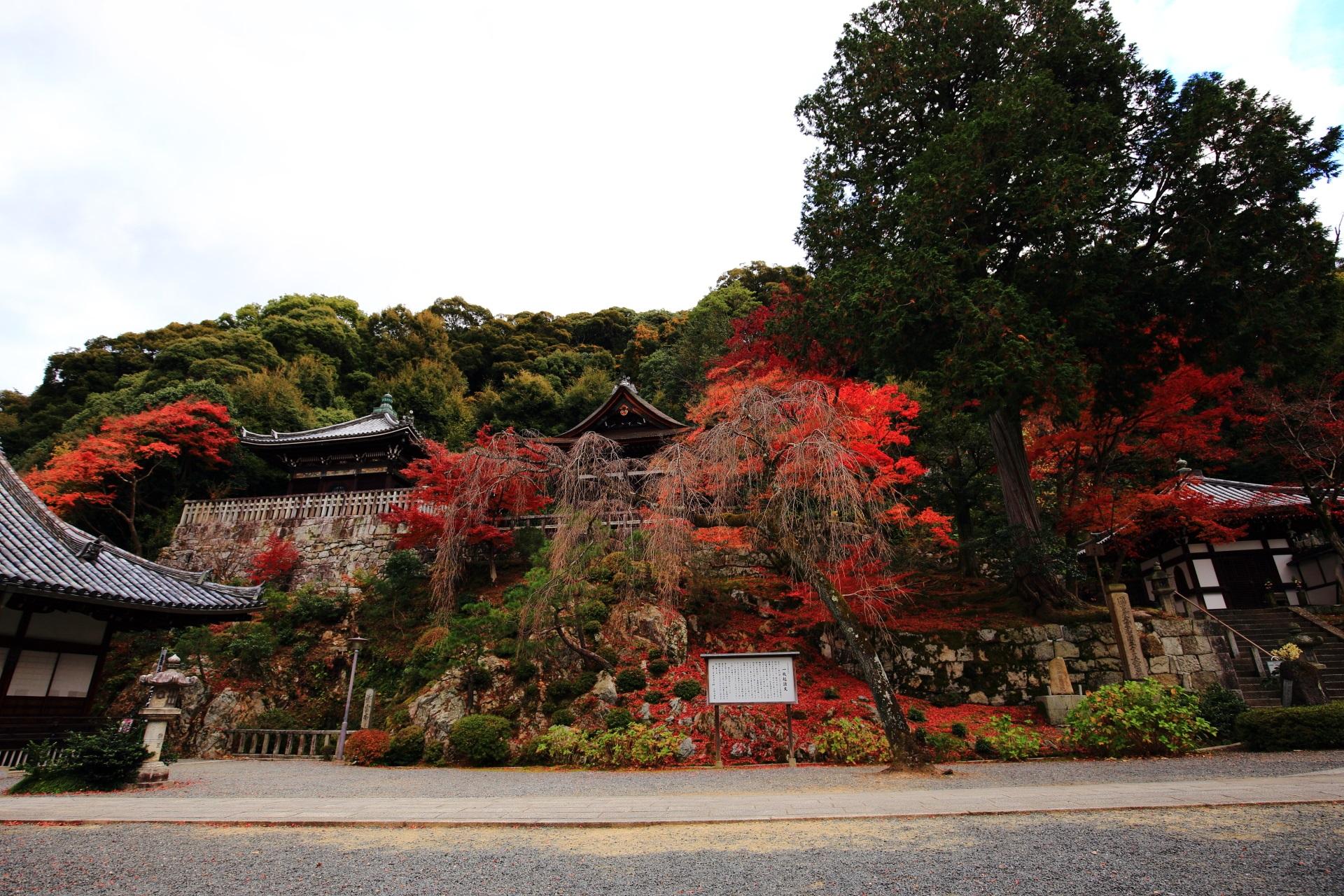 色とりどりの紅葉が溢れる知恩院の法然上人御廟