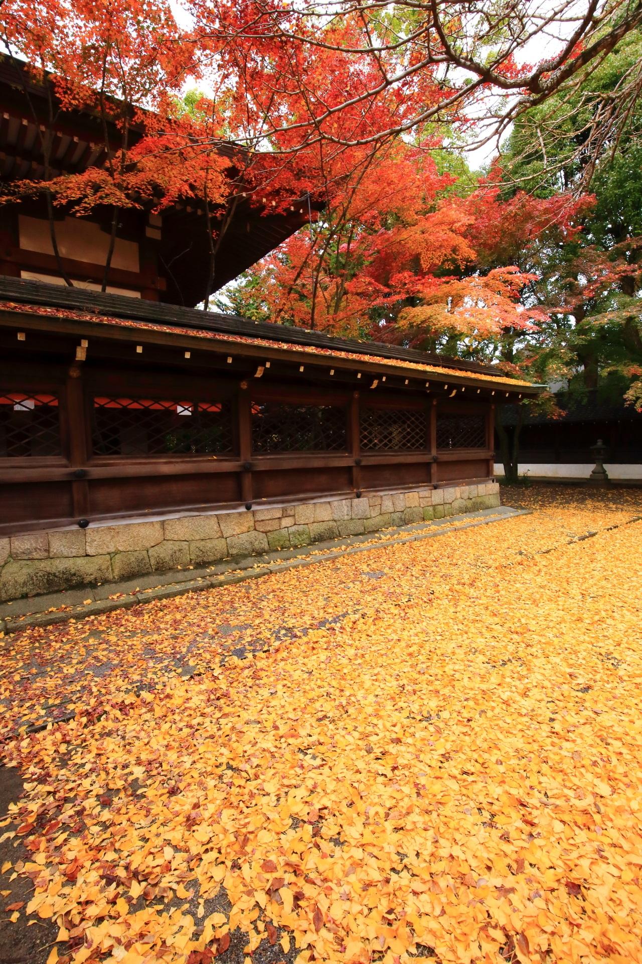 上御霊神社の散り銀杏と紅葉の黄色と赤の見事なコントラスト