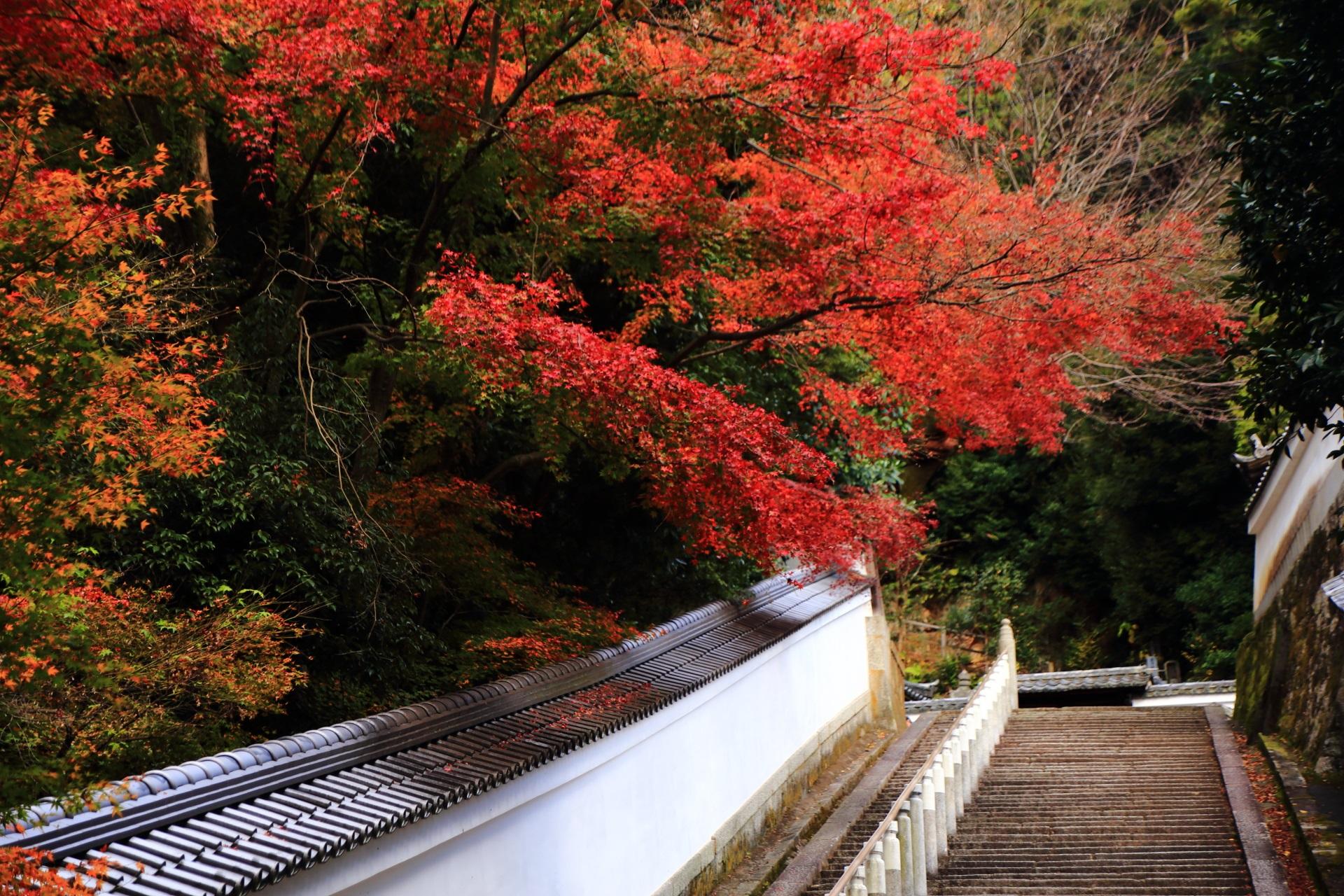 知恩院の多彩な紅葉につつまれる長い石段