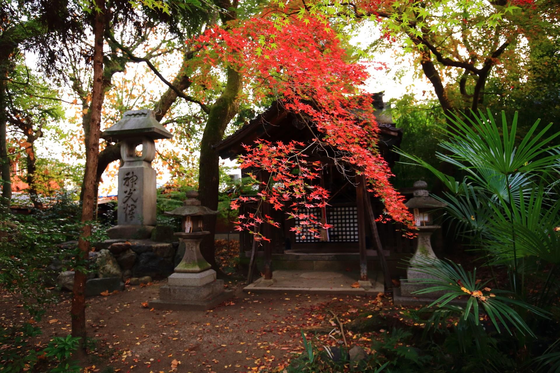 神明神社前で色づく鮮やかな紅葉