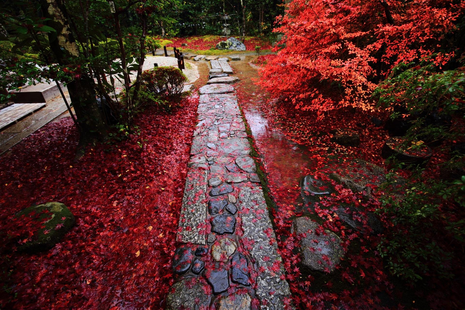 金福寺の庭園入口付近の見事な彩りの参道と散り紅葉