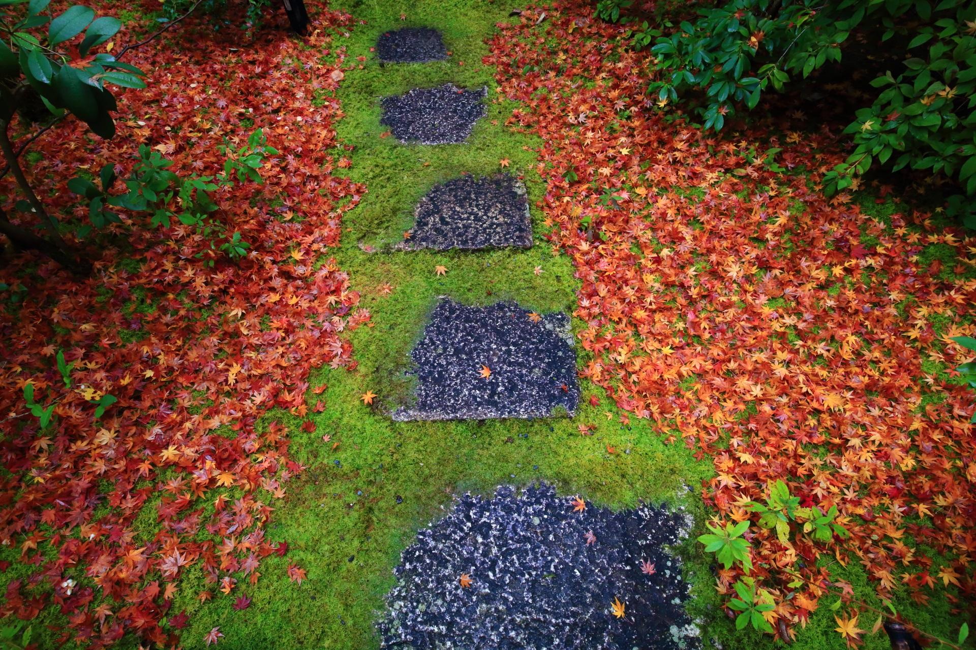 光悦垣の向かいあたりから続く参道の散り紅葉