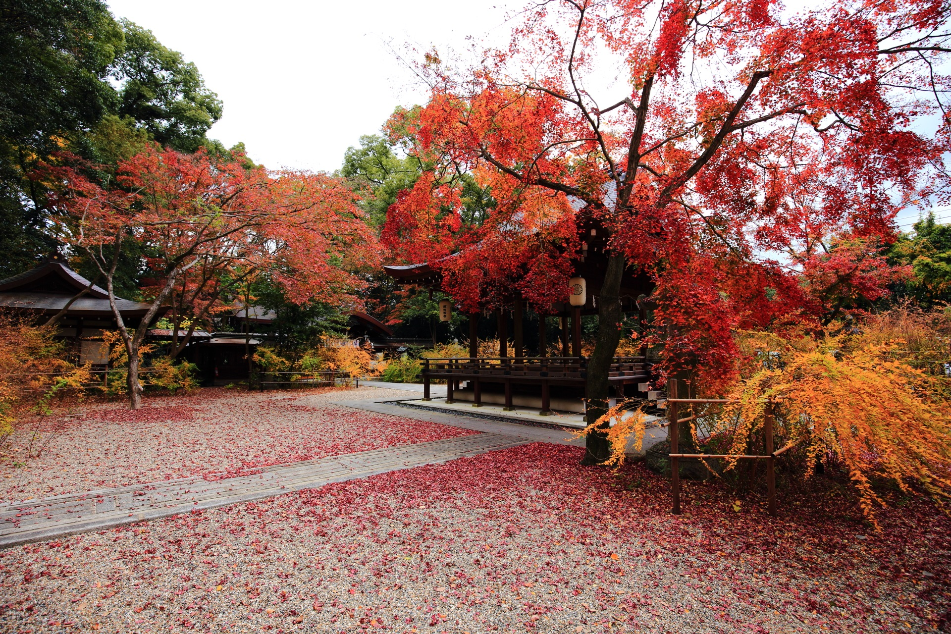 Kyoto Nashinoki-jinja shrine autumn leaves