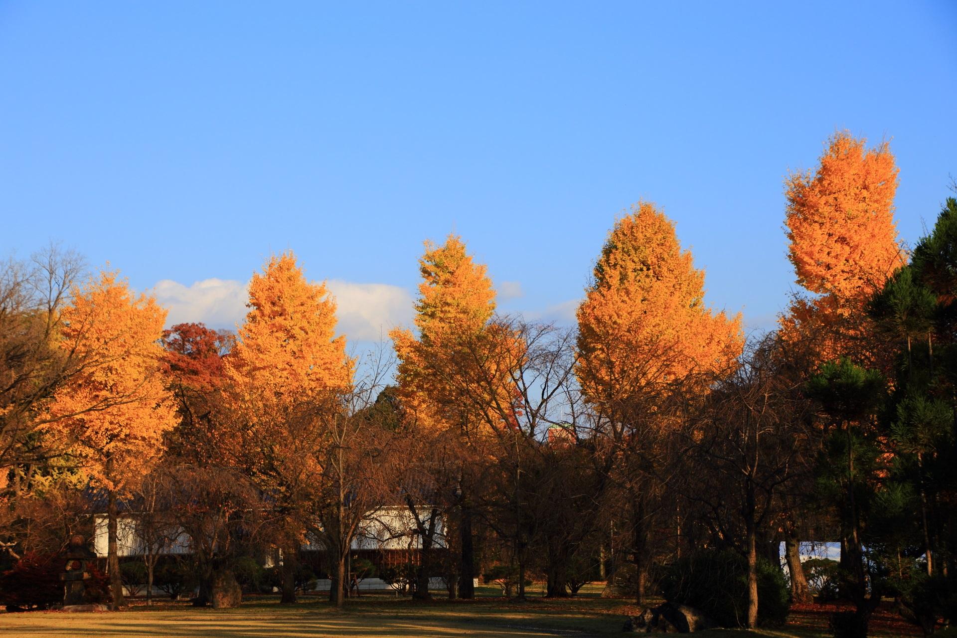秋を華やぐ二条城の銀杏並木