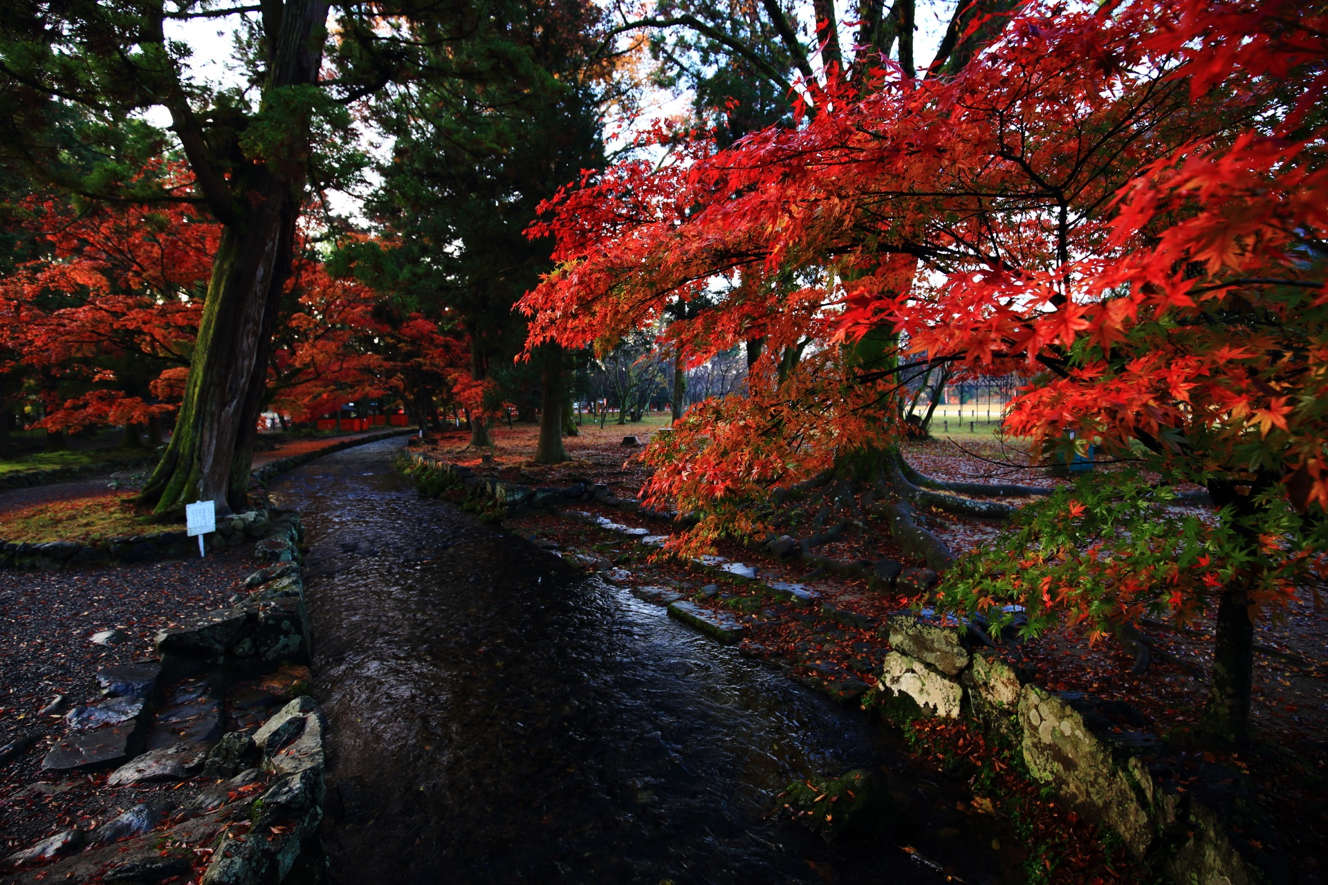 colored leaves and river Kamigamo-jinja-Shrine in Kyoto,Japan
