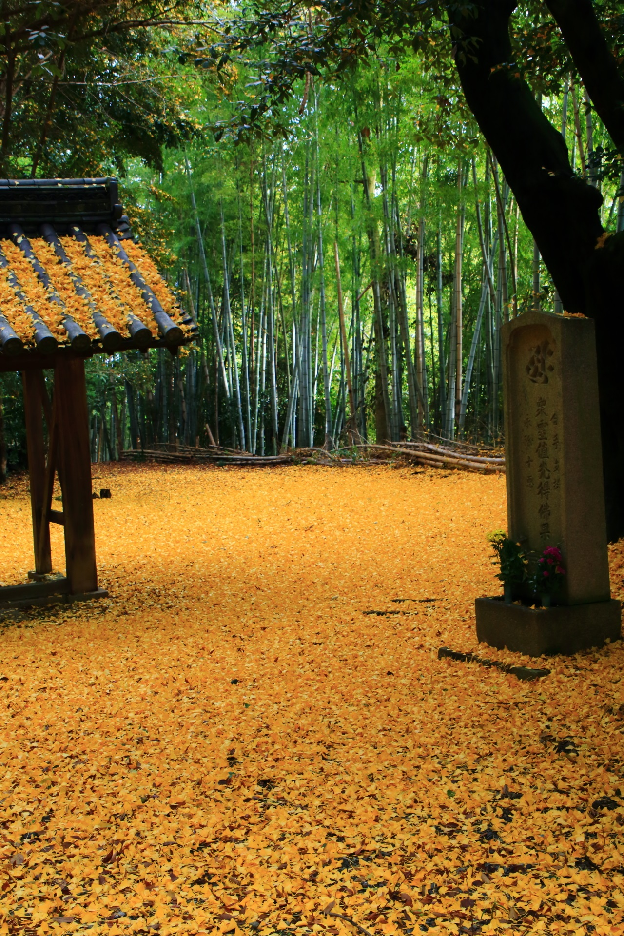 scattered ginkgo Yamazaki-shoten Temple in Kyoto,Japan