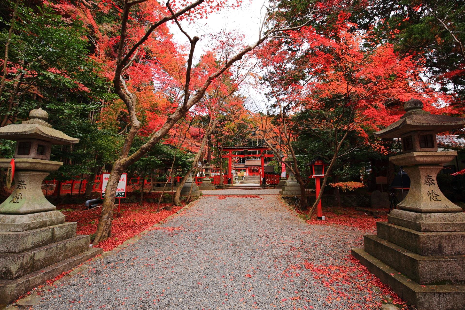 情緒ある秋の彩りにつつまれる大原野神社の二ノ鳥居付近の紅葉