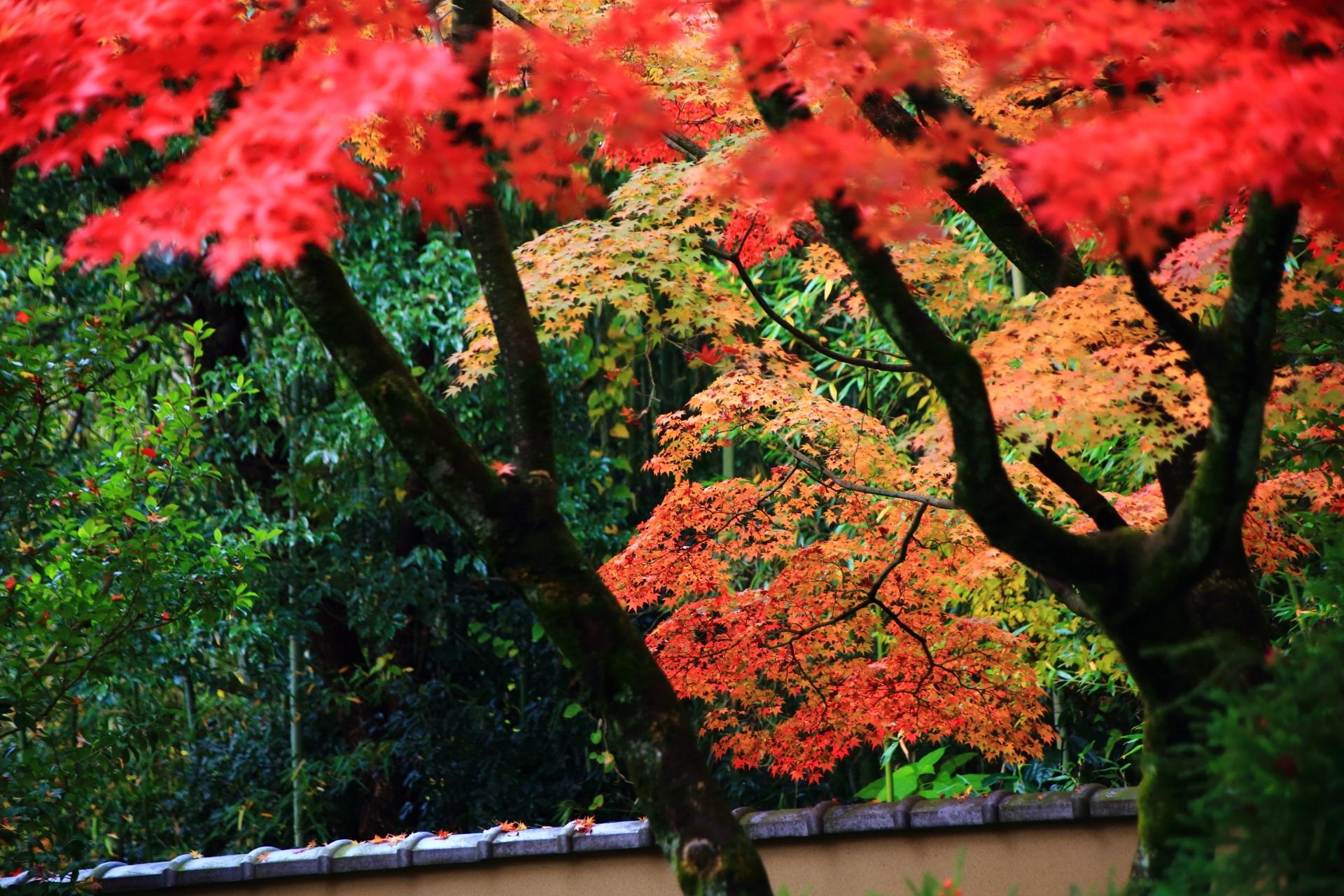 後ろの緑に映える華やかな色とりどりの紅葉