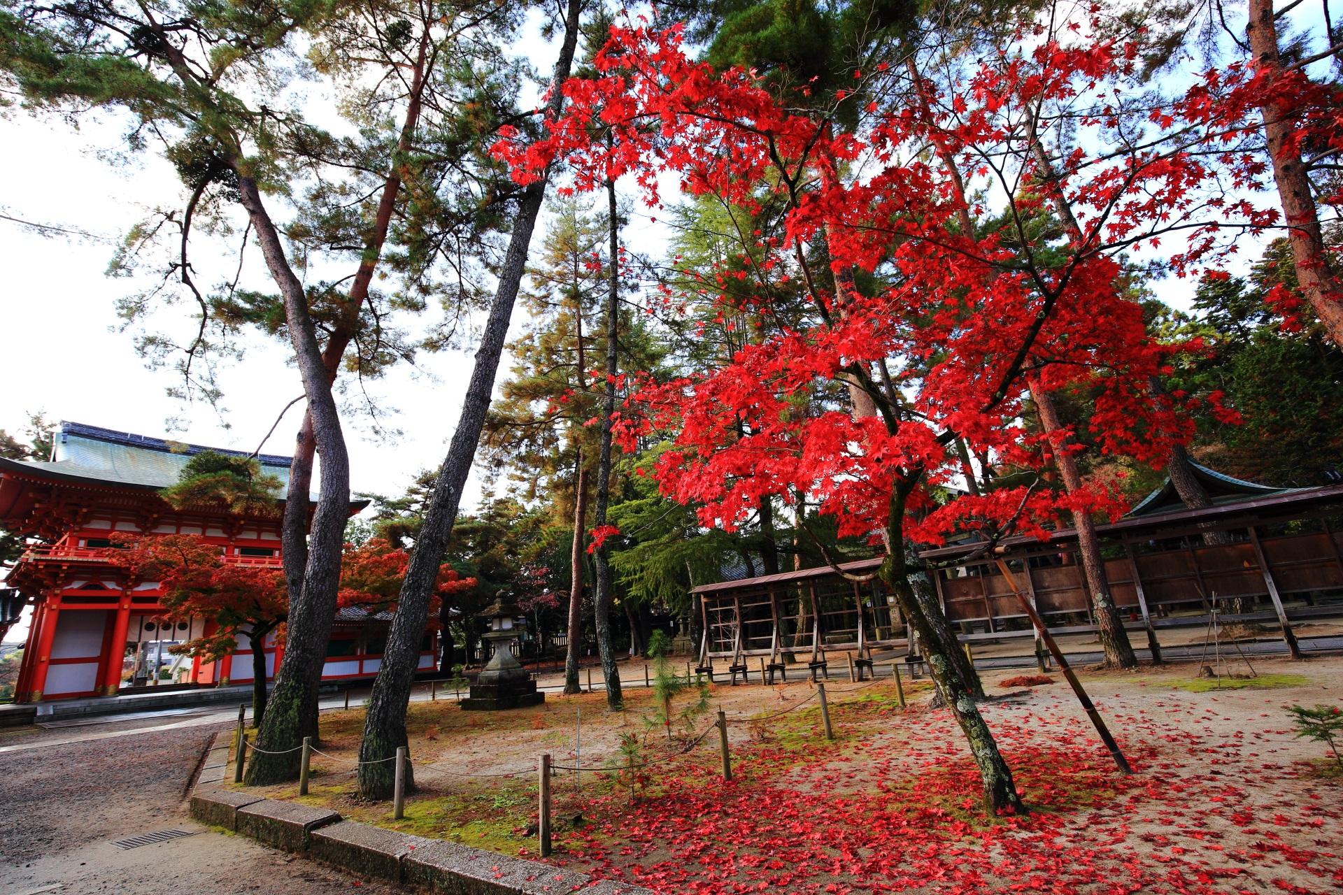 鮮やかな紅葉と散りもみじが彩る楼門