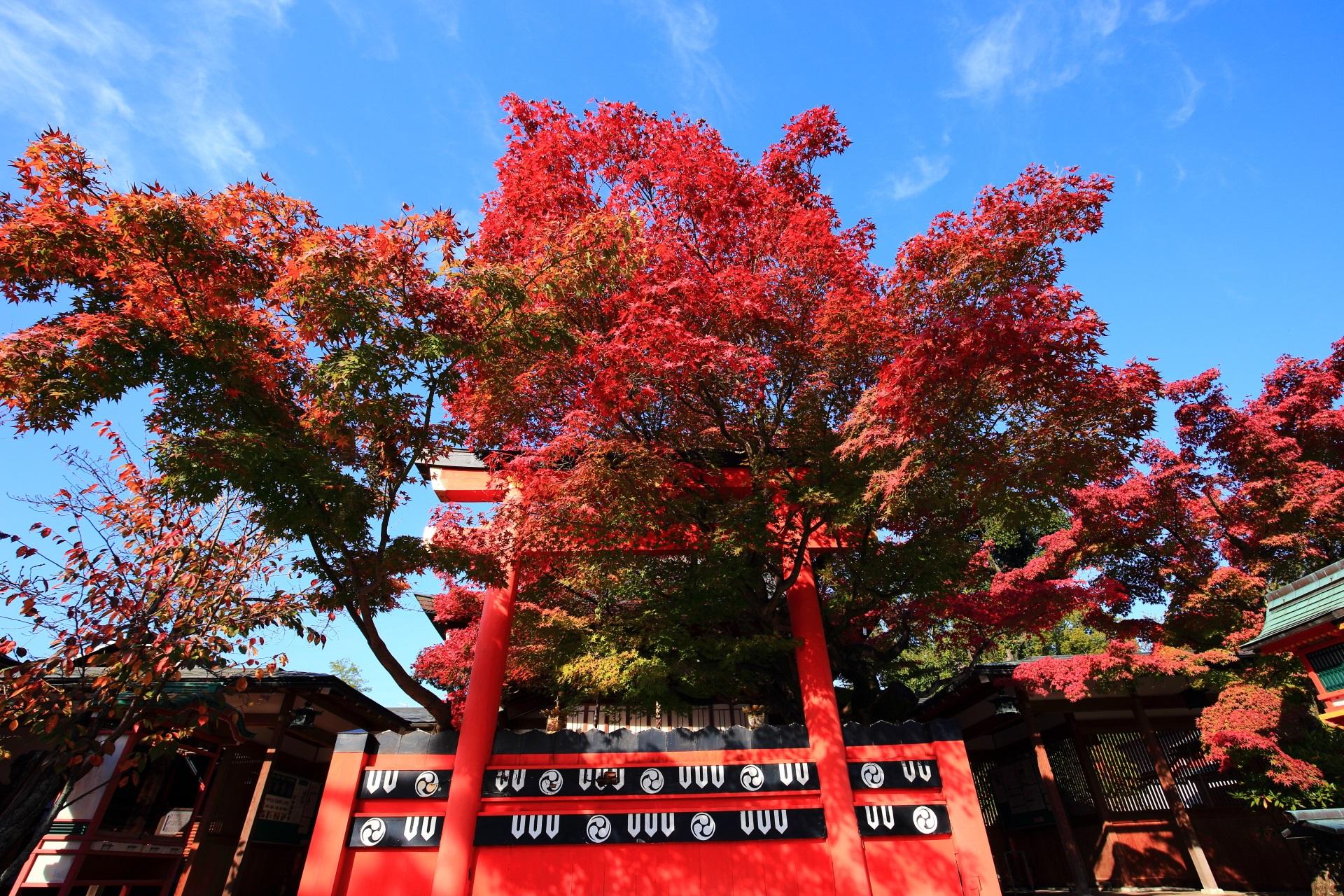 車折神社の鮮やかな紅葉と秋の情景