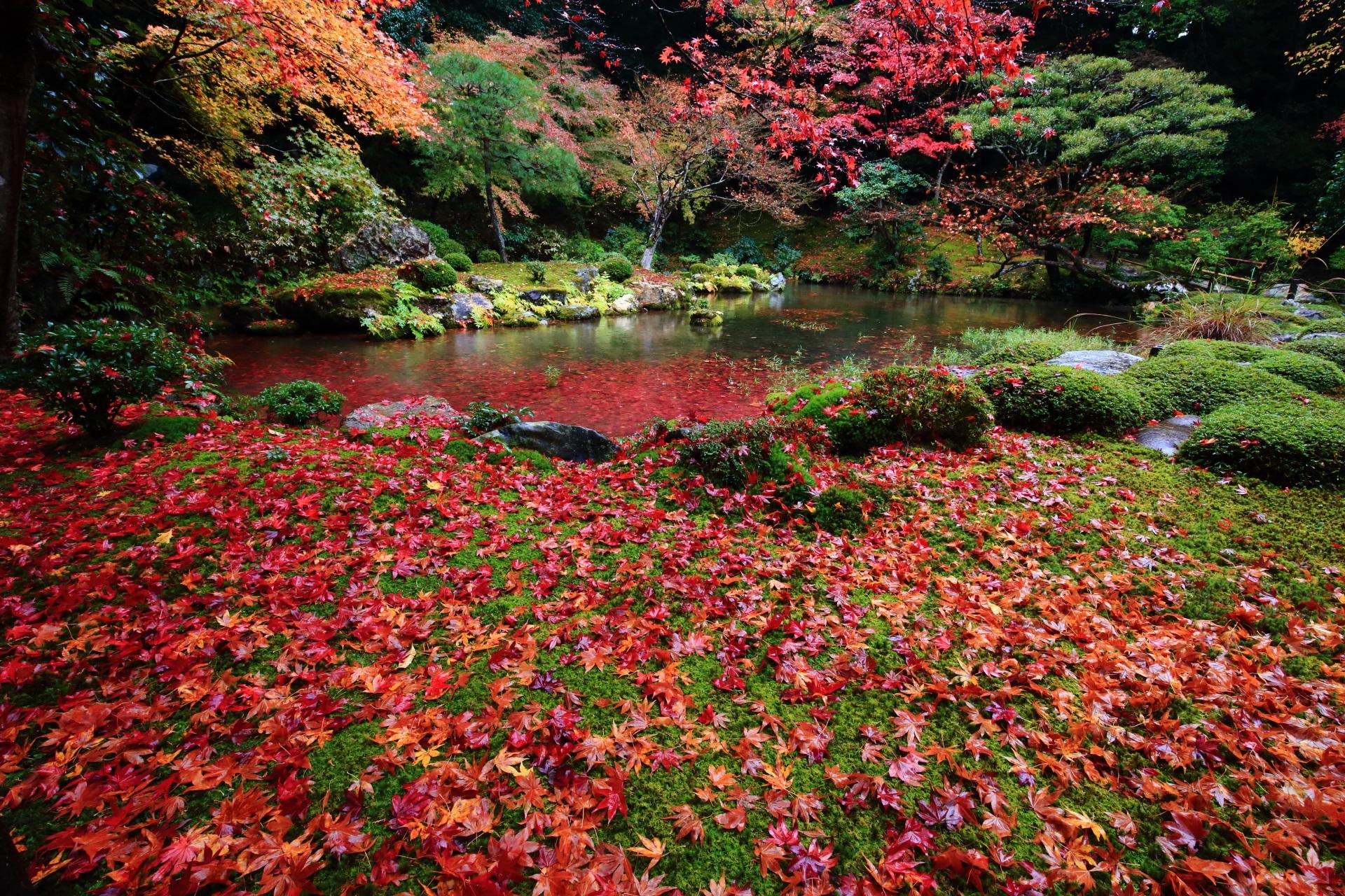 色とりどりの極上の散り紅葉
