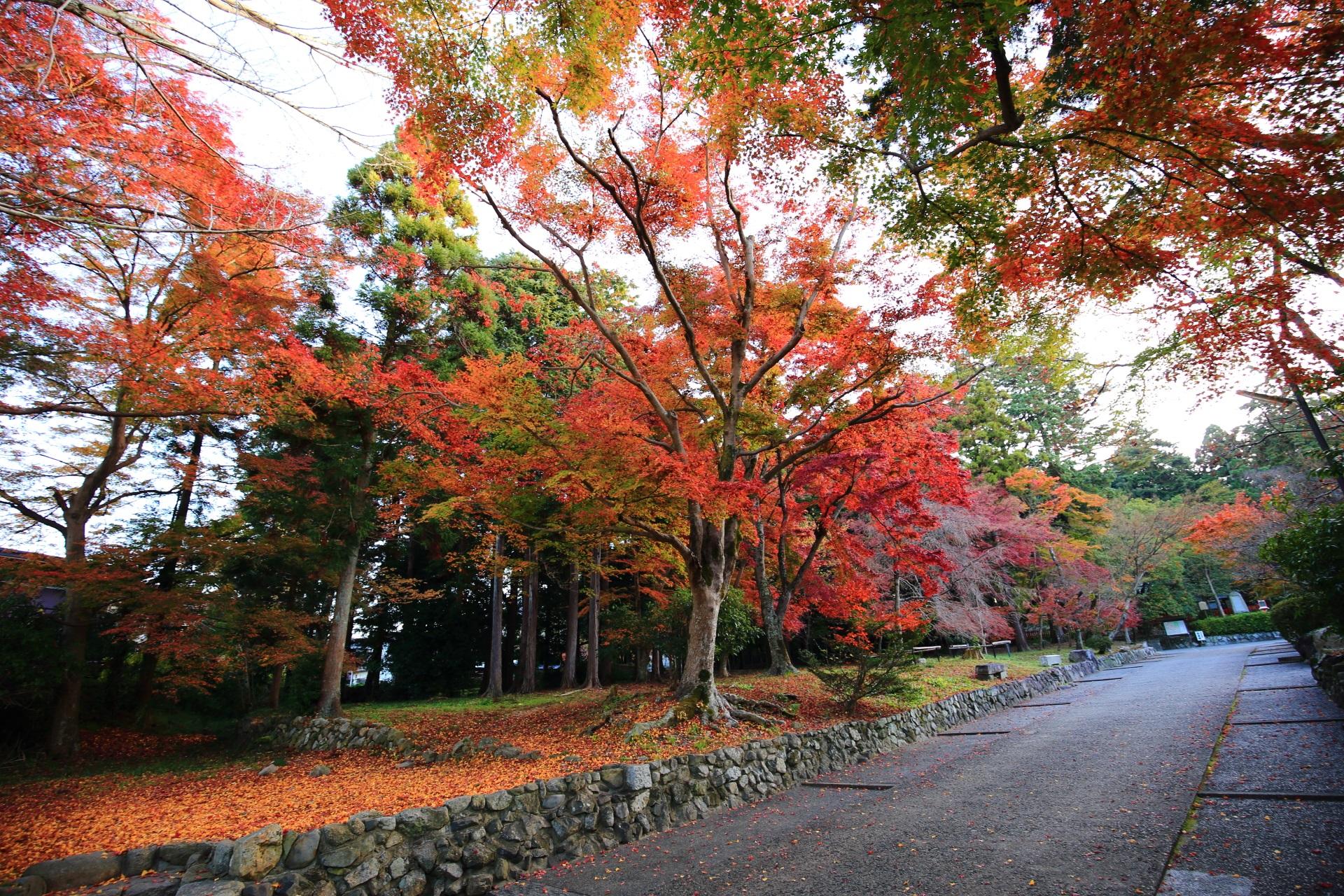 鷺森神社(さぎのもりじんじゃ)の紅葉が華やぐ長い参道