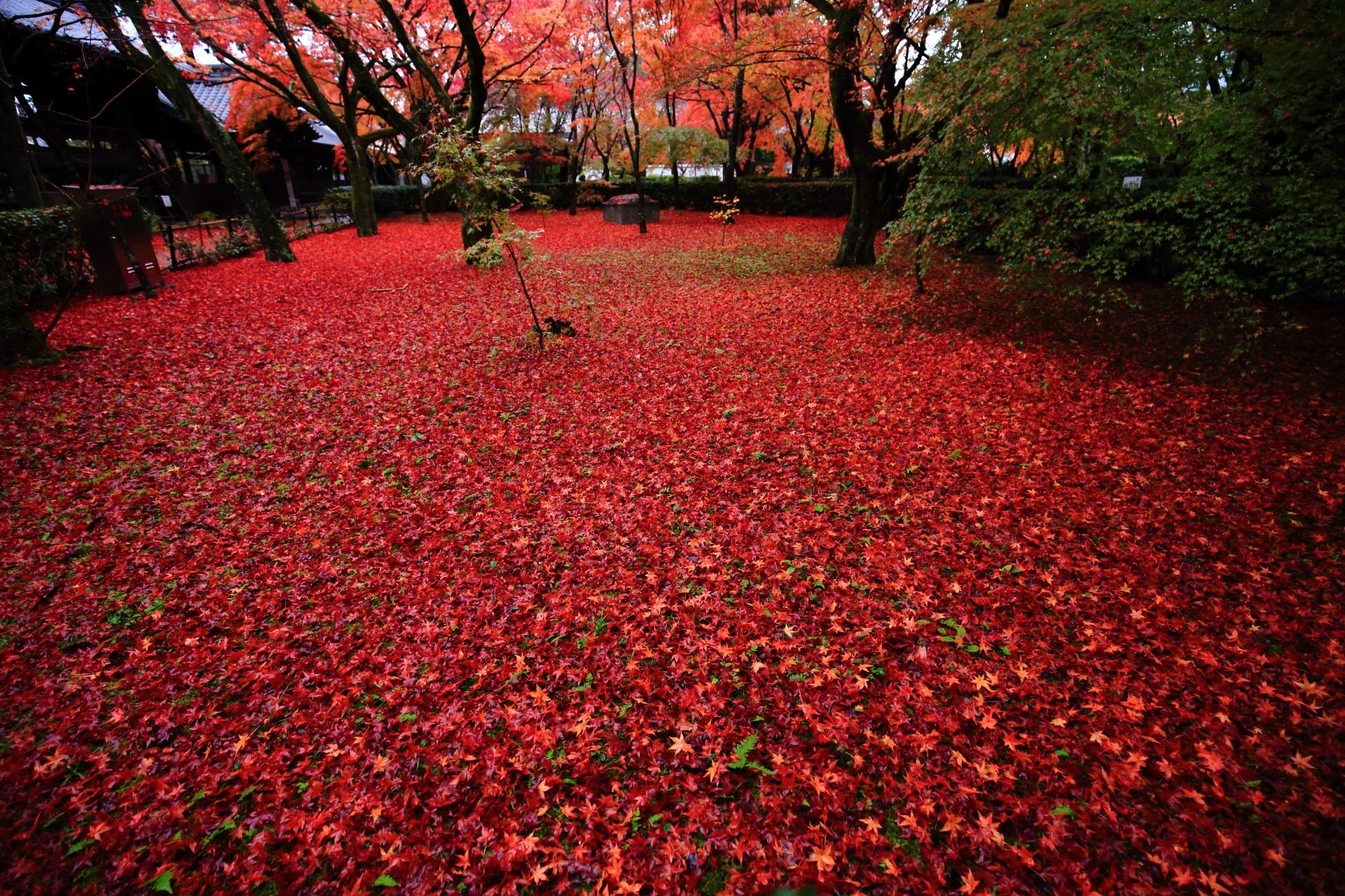 極上の散り紅葉に彩られた晩秋の真如堂