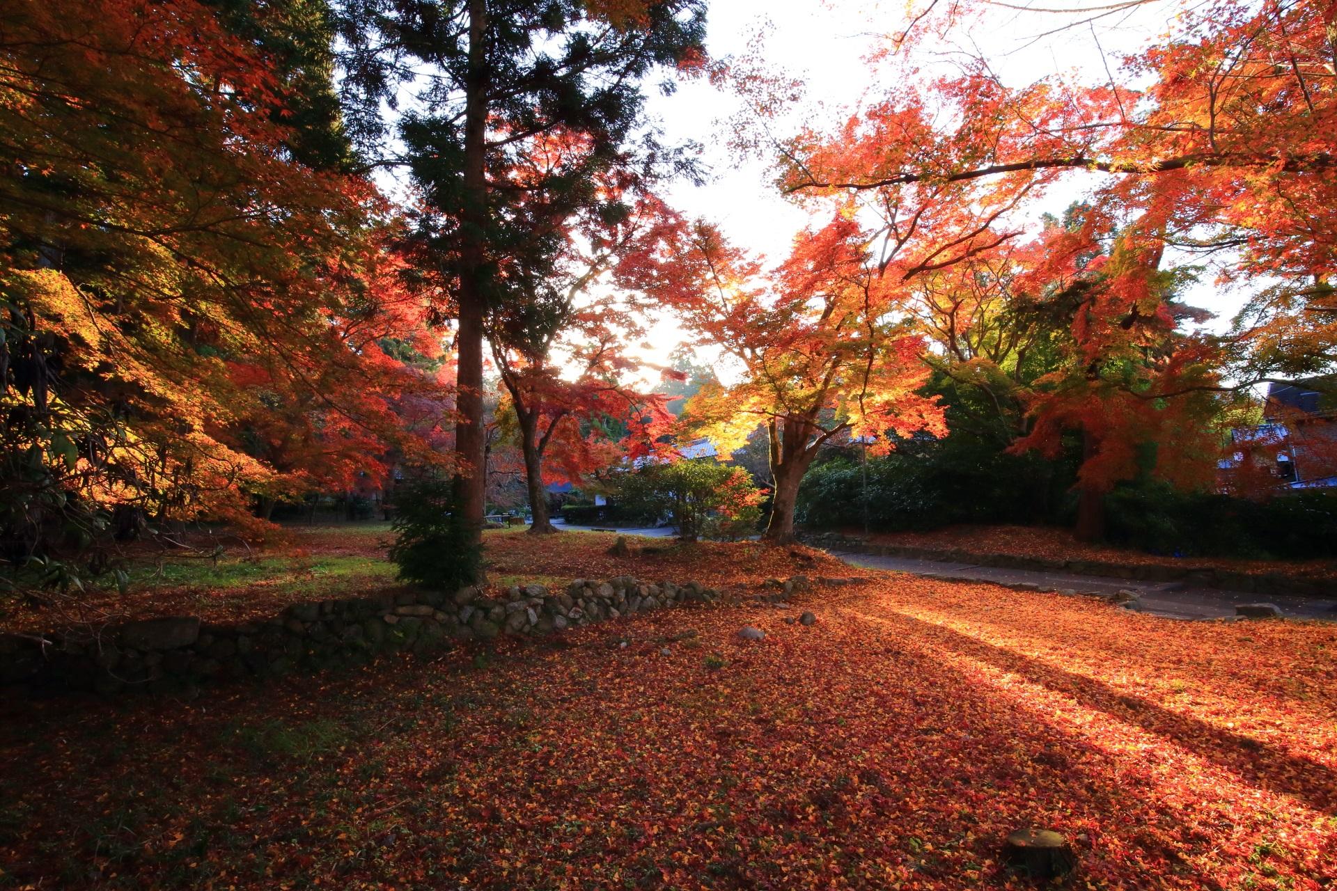 日が昇ってきて光が差し込む紅葉と散りもみじ