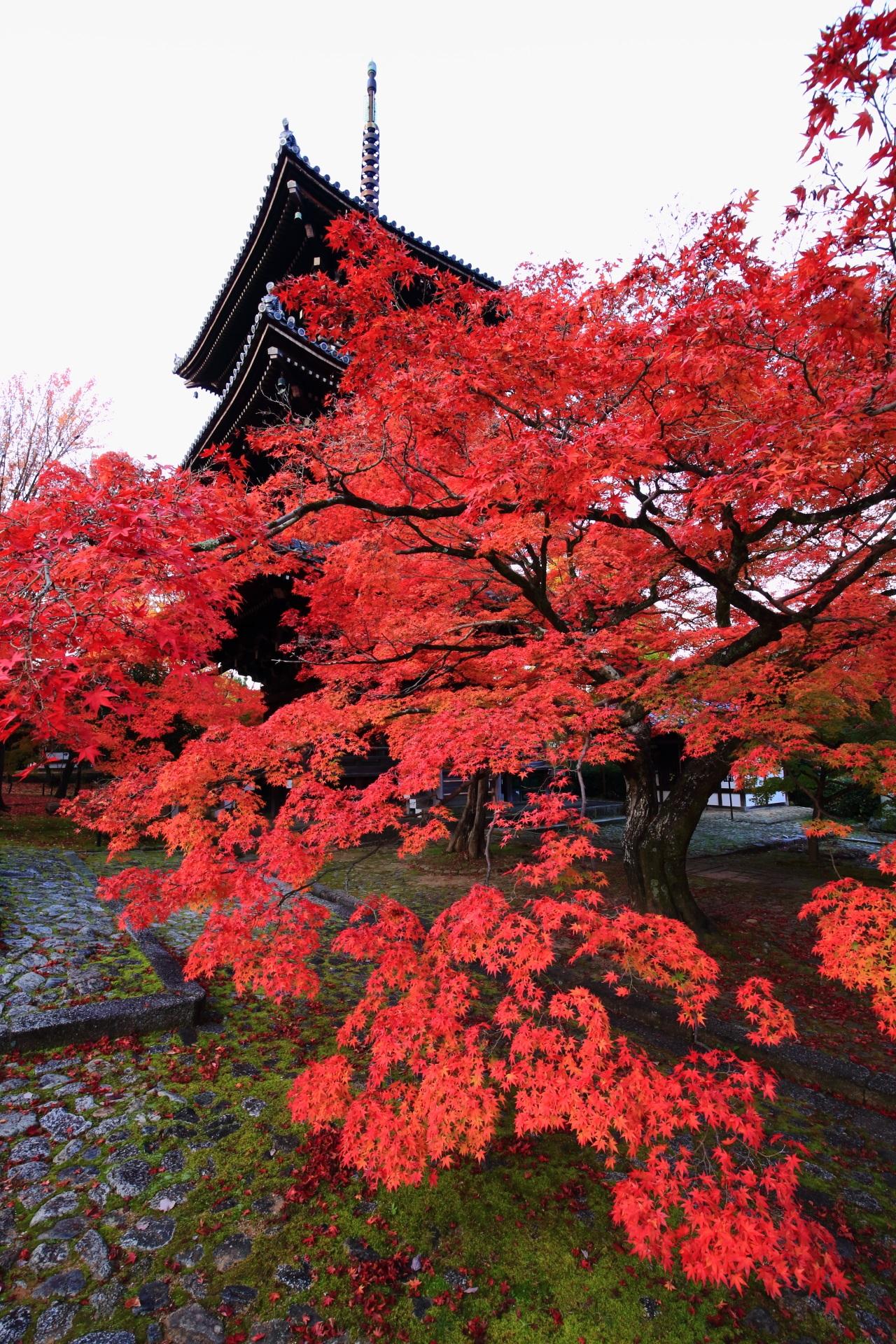 三重塔と苔を彩る圧巻の紅葉