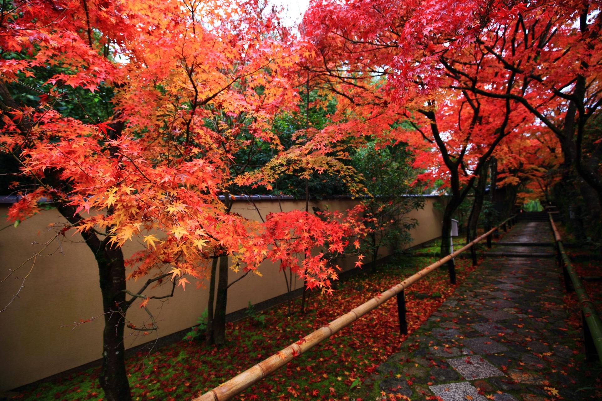 光悦寺の美しすぎる紅葉の参道