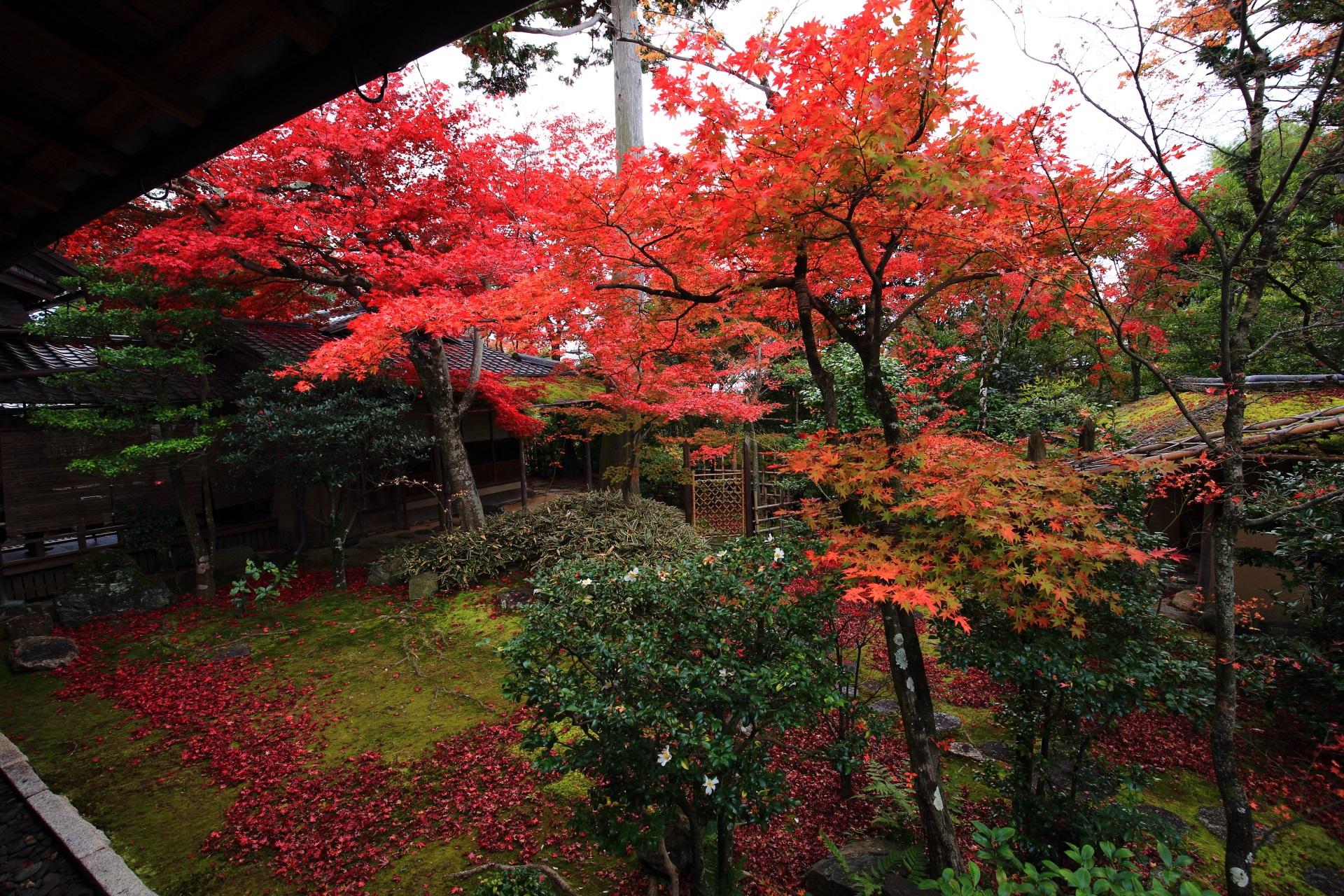 大法院のお茶の庭園を華やぐ多彩な紅葉と散りもみじ