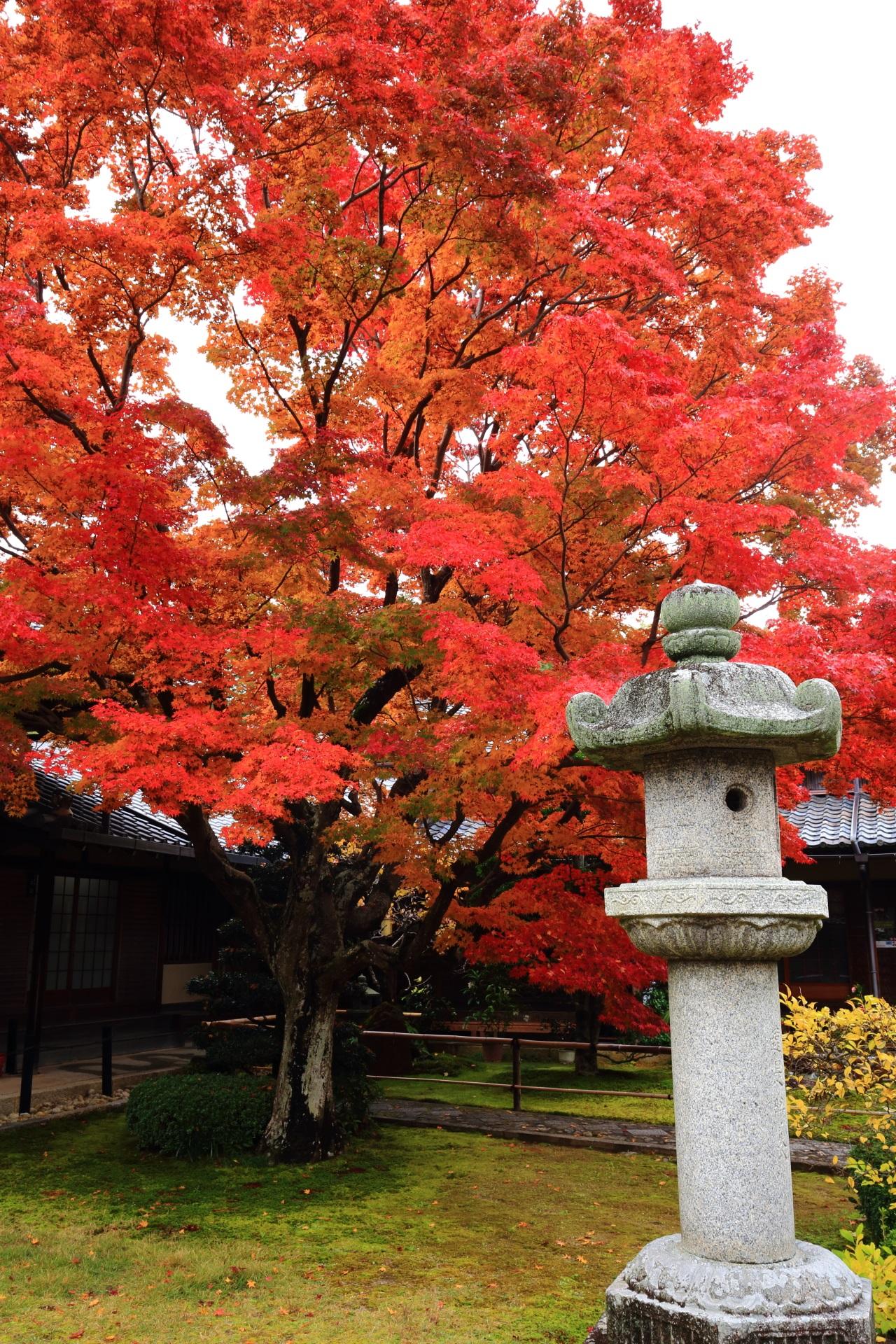 空と伽藍を覆う見事な紅葉と佇む灯籠