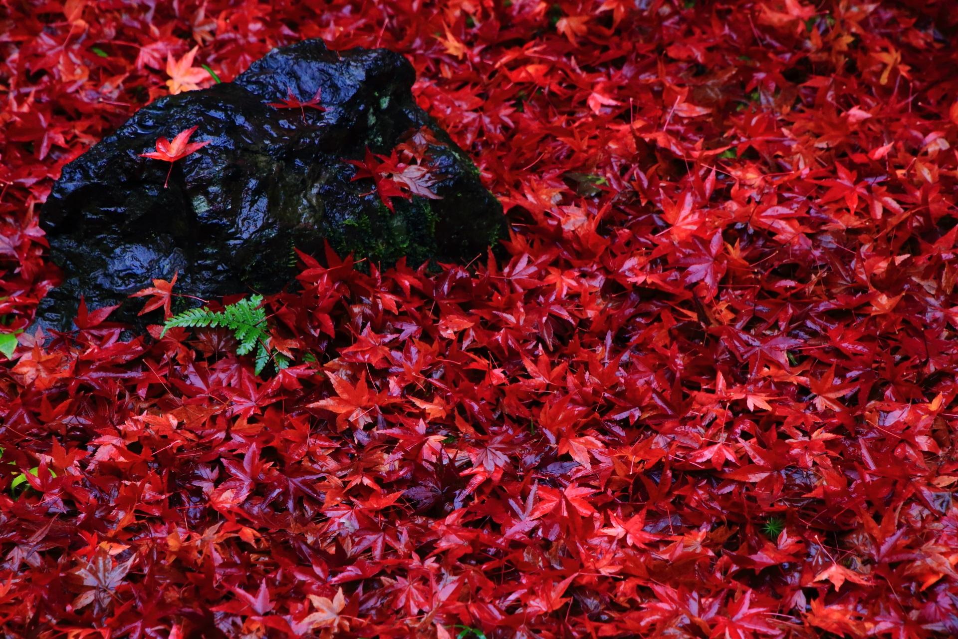 紅葉の量が半端ない金福寺の散り紅葉
