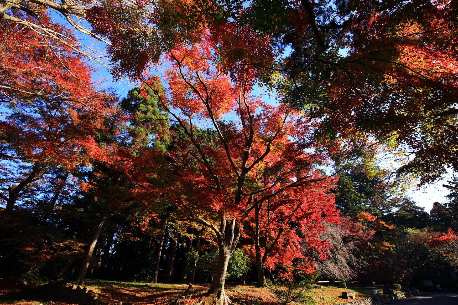 日差しが強く影ができるも煌びやかな紅葉