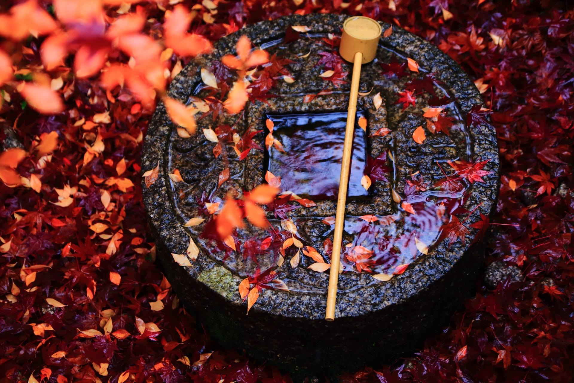 もみじとツツジが散る雨で濡れた金福寺の蹲(つくばい)
