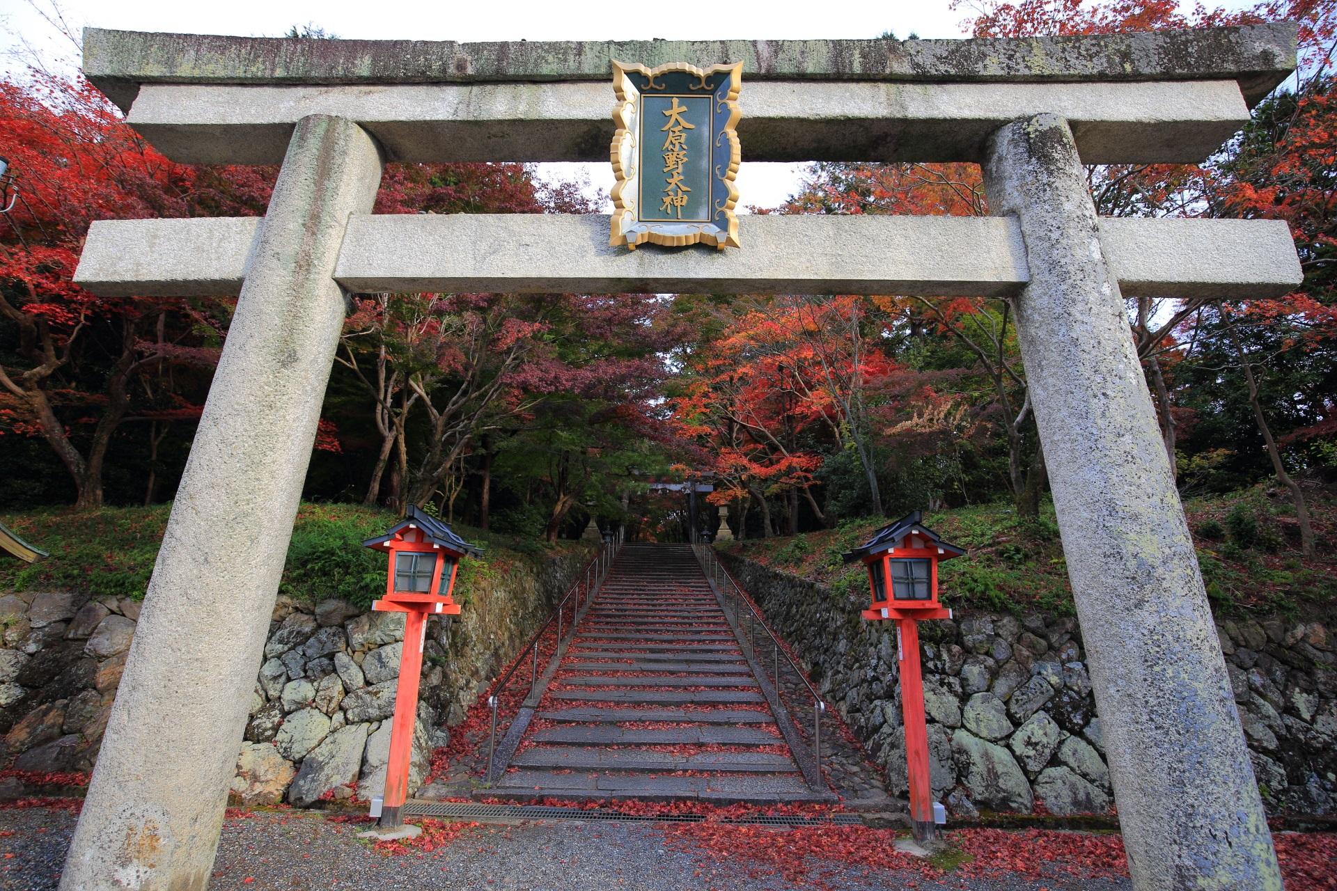 鮮やかな秋色につつまれる紅葉の参道
