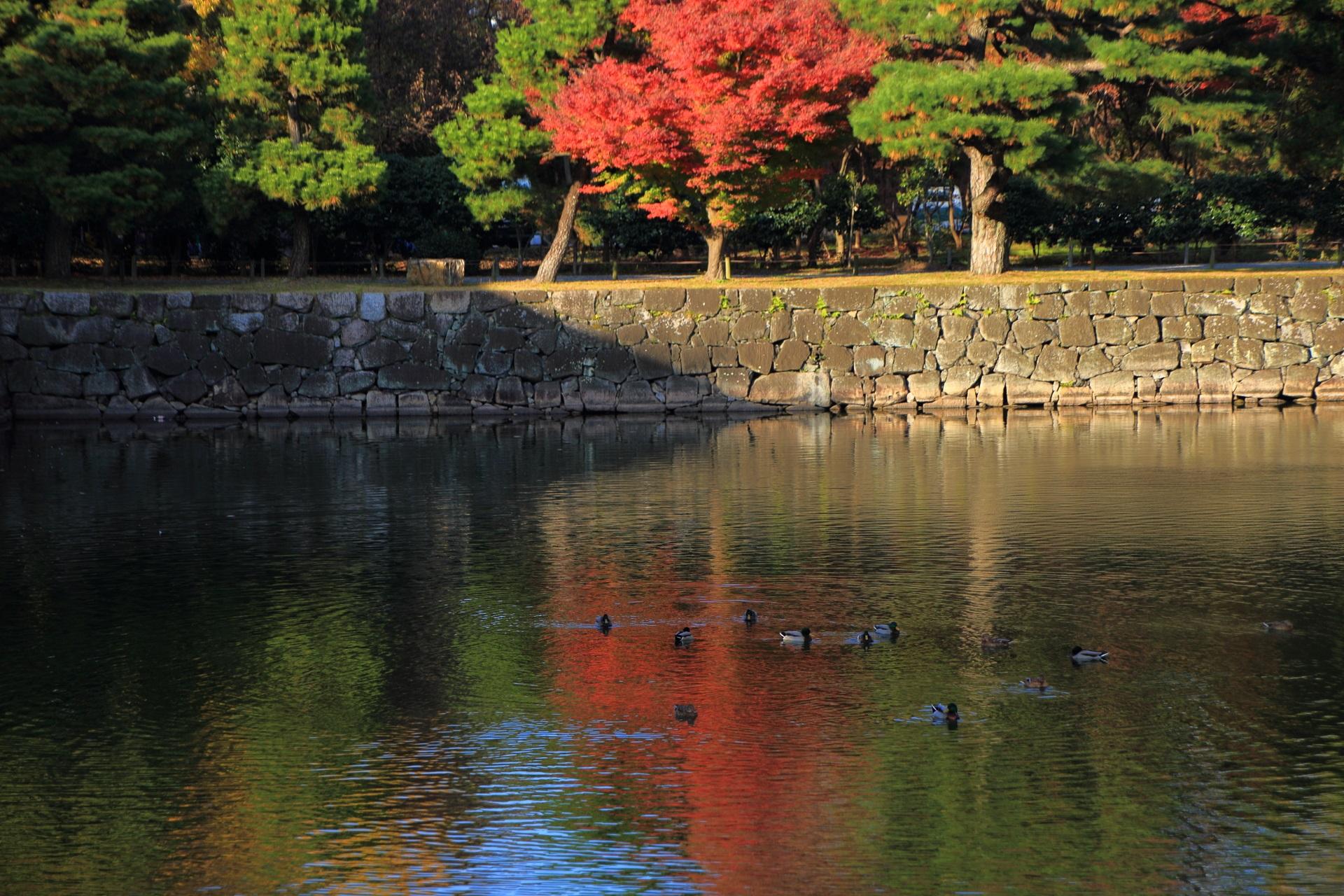 二条城のお堀の紅葉とほのかな水鏡