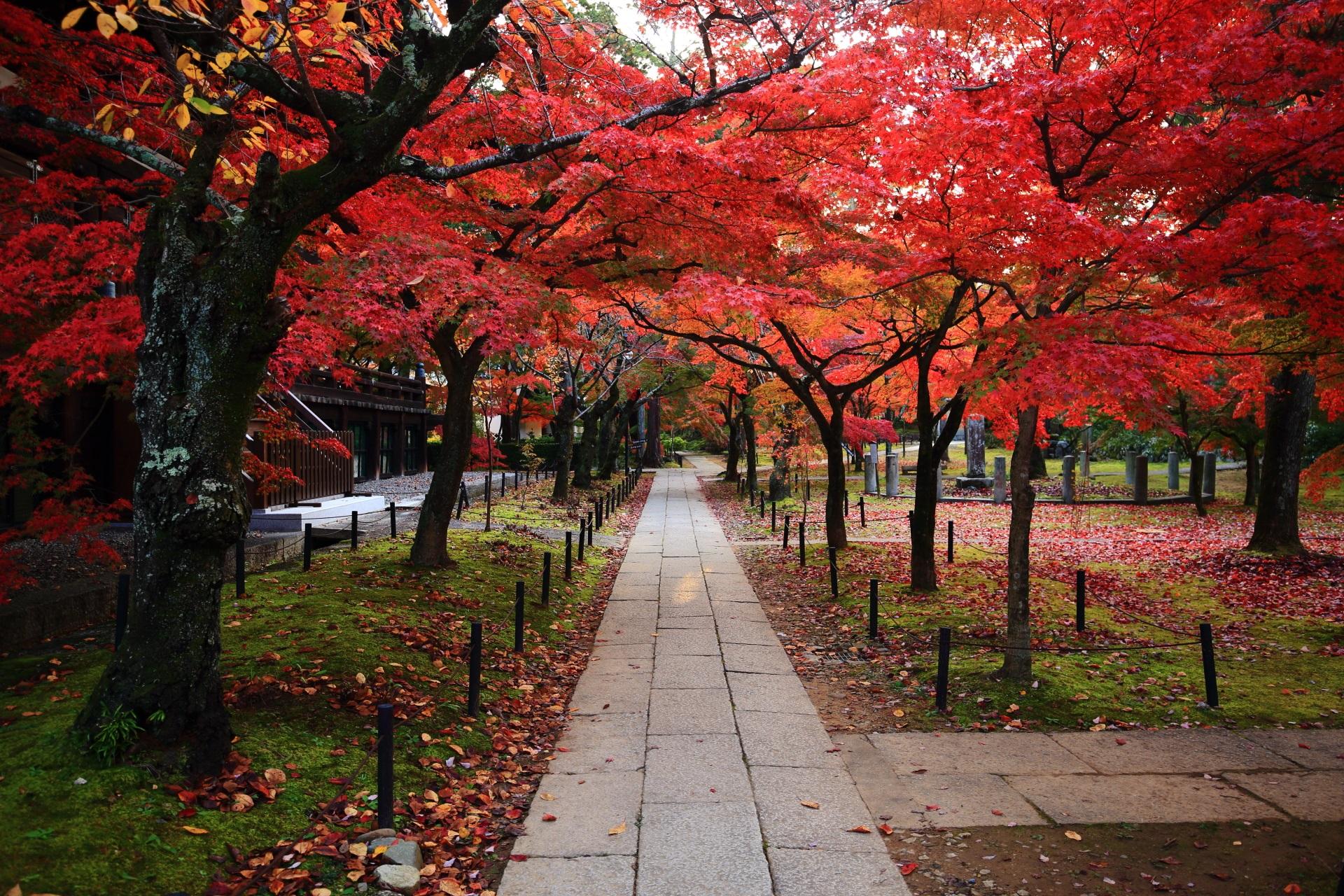 空を覆うようにたくさんの紅葉が色づく真如堂の本堂横の参道