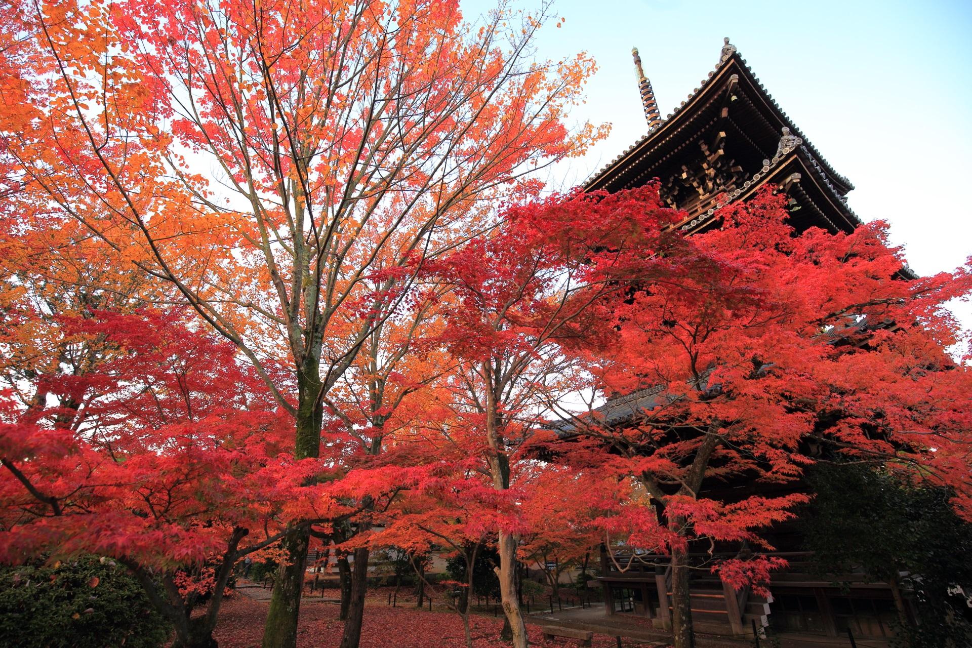 三重塔をはじめとする伽藍を秋色に染める溢れる紅葉
