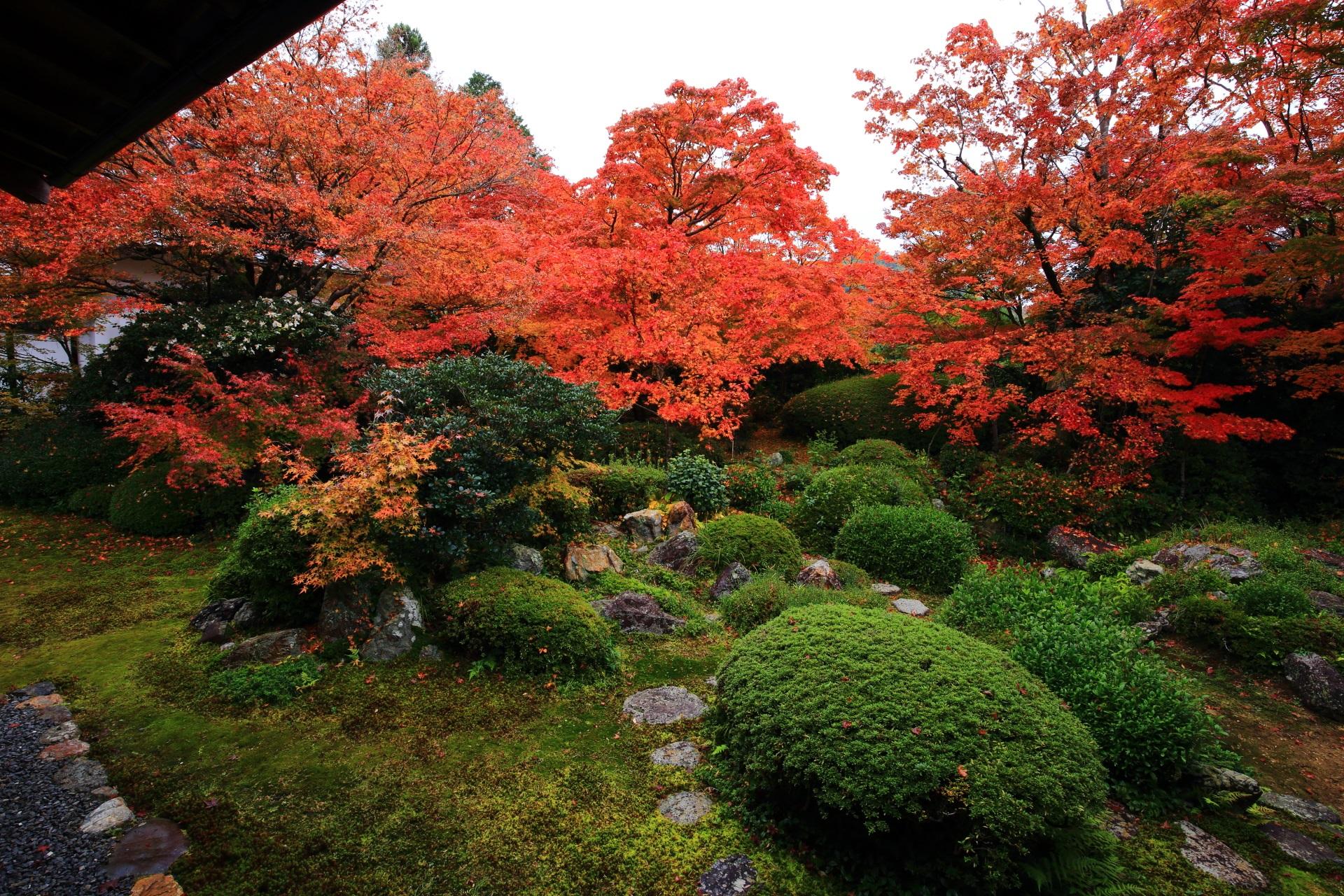苔やサツキの刈り込みの庭園を華やぐ雄大な紅葉