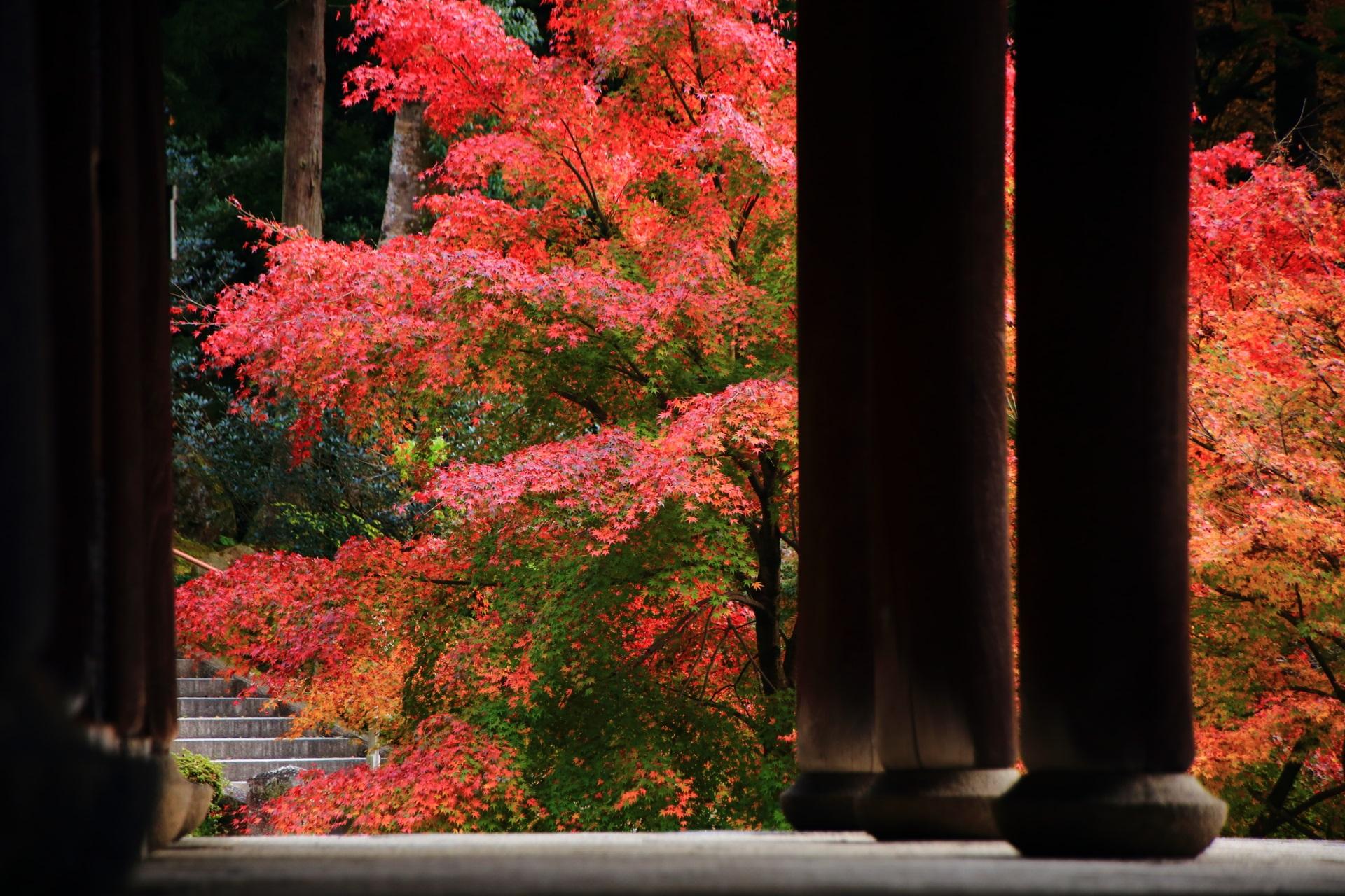 知恩院の経蔵の柱越しに眺めた溢れ出す燃えるような紅葉