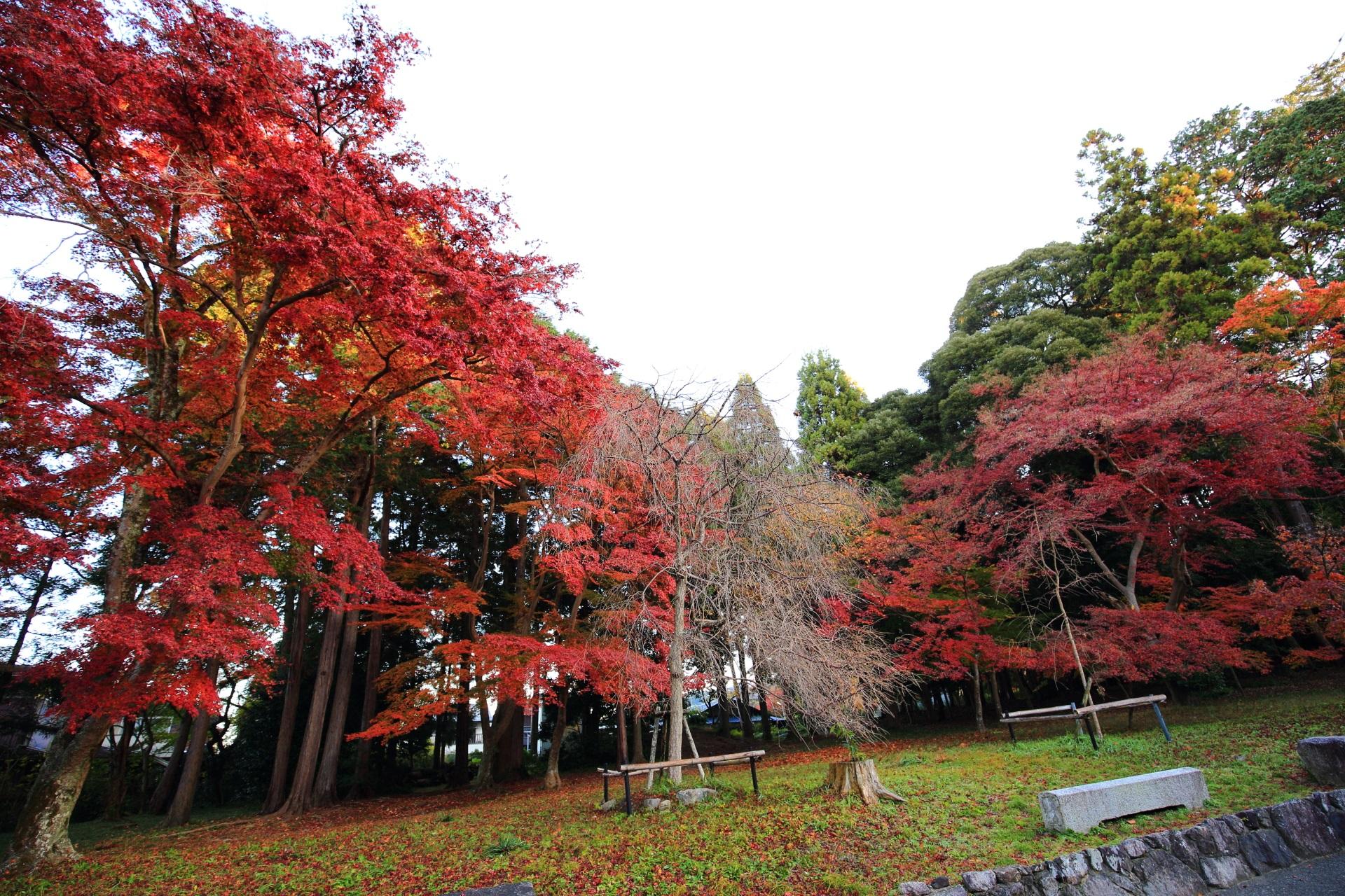豪快に色づく雄大な紅葉