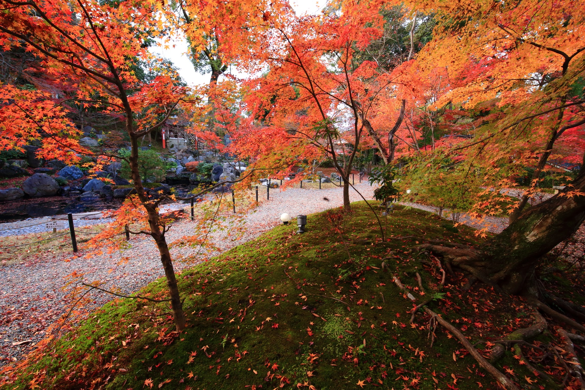 長岡天満宮の錦景苑の秋色の散りもみじや苔