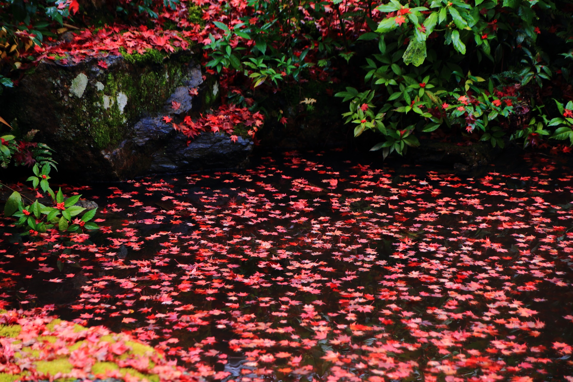 実相院門跡の池の上に散った鮮やかな紅葉