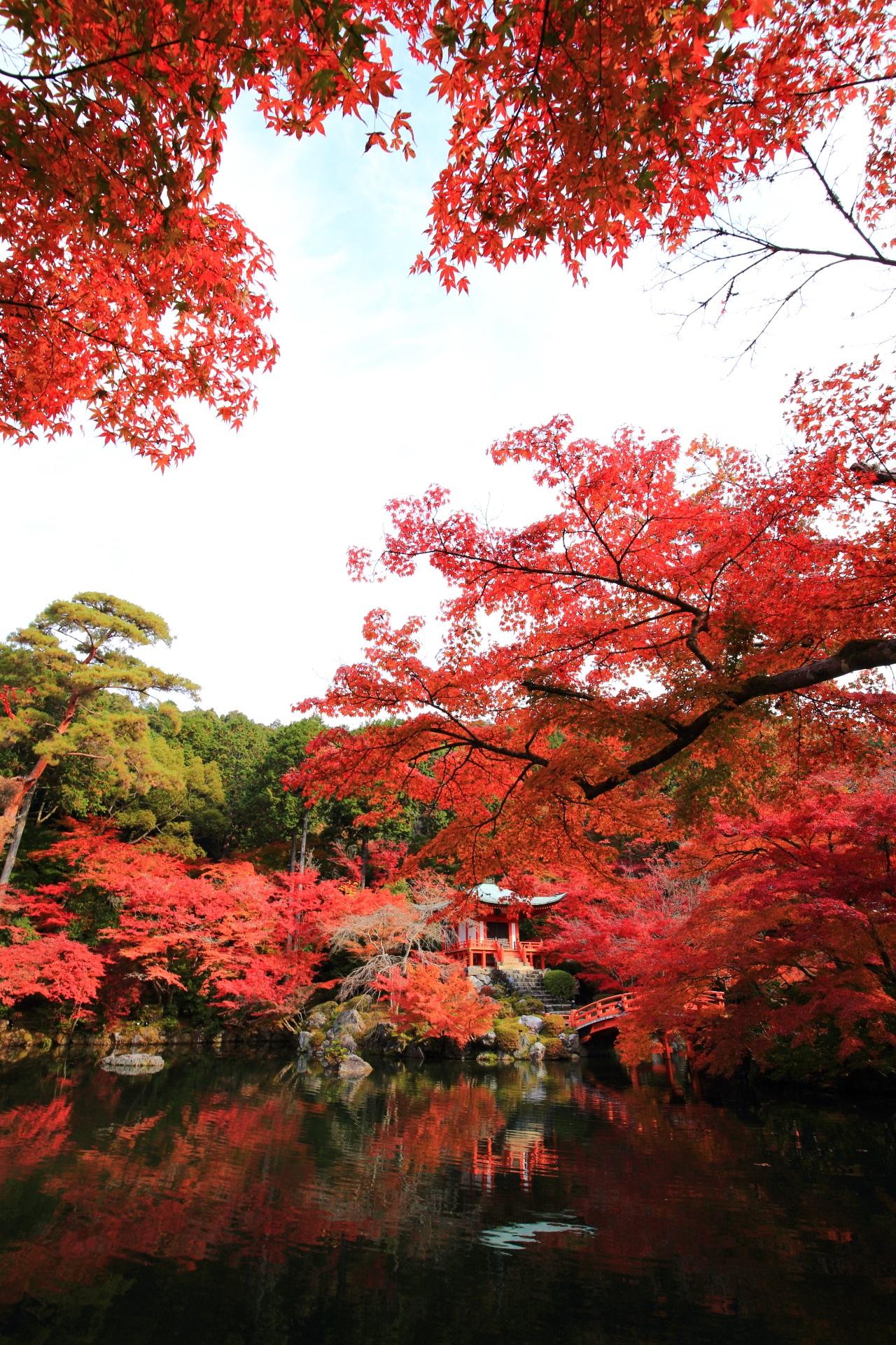 圧巻の紅葉につつまれる秋の醍醐寺