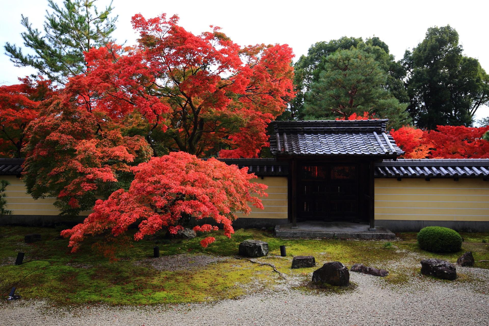 等持院の勅使門を彩る溢れる鮮やかな紅葉