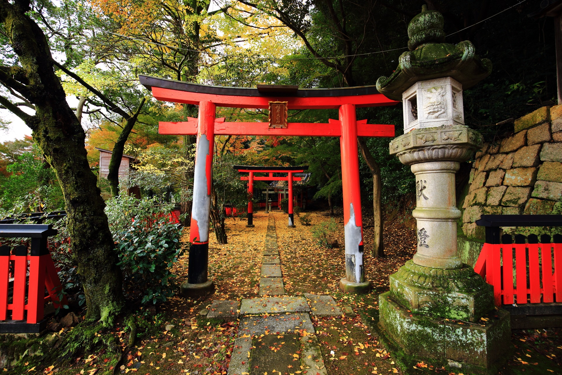 山崎聖天の稲荷社の赤い鳥居と華やかな散り銀杏