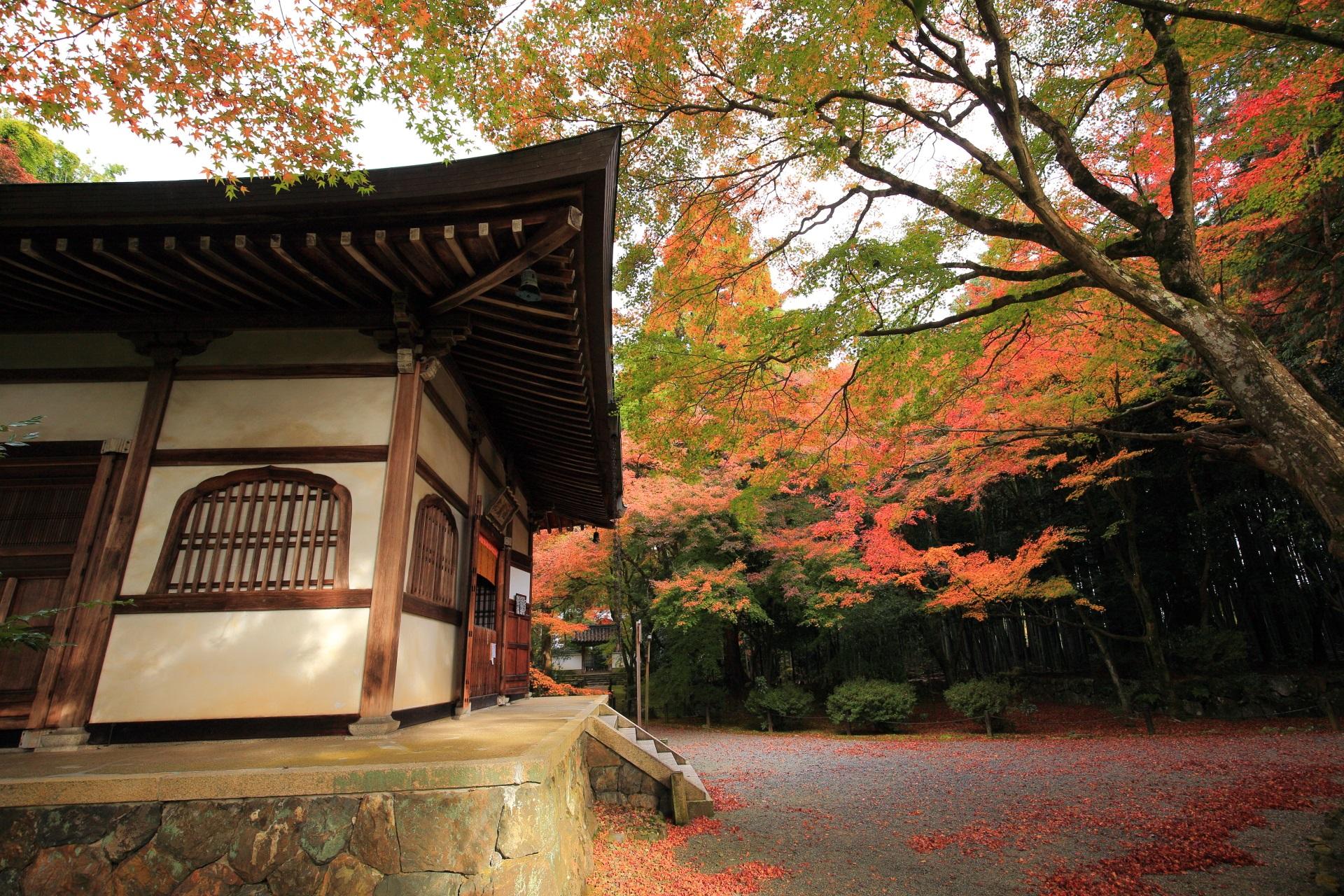 ほのかな秋色の空間に佇む白壁の本堂