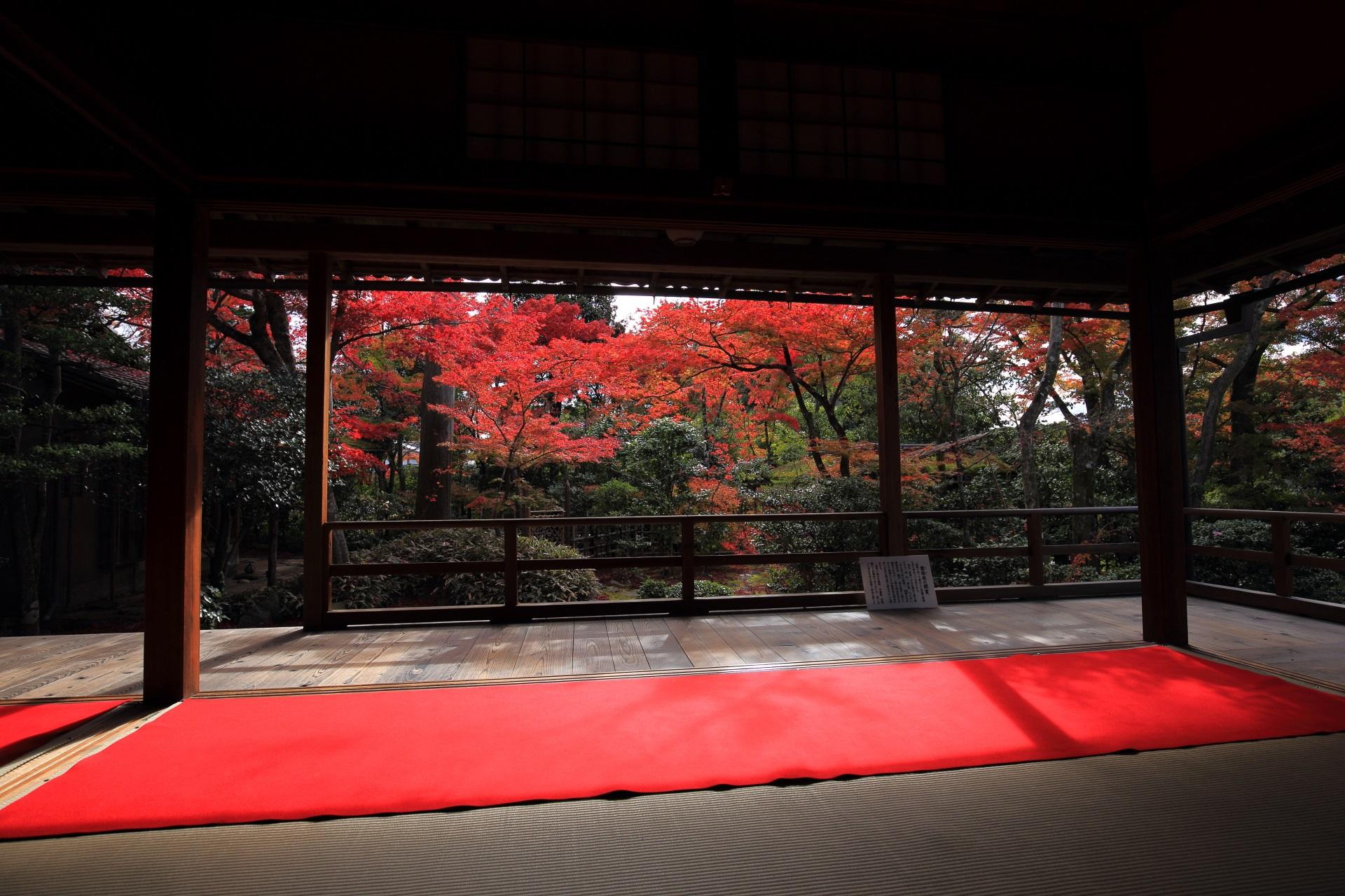 赤い絨毯が演出する大法院の客殿奥から眺めた庭園と紅葉