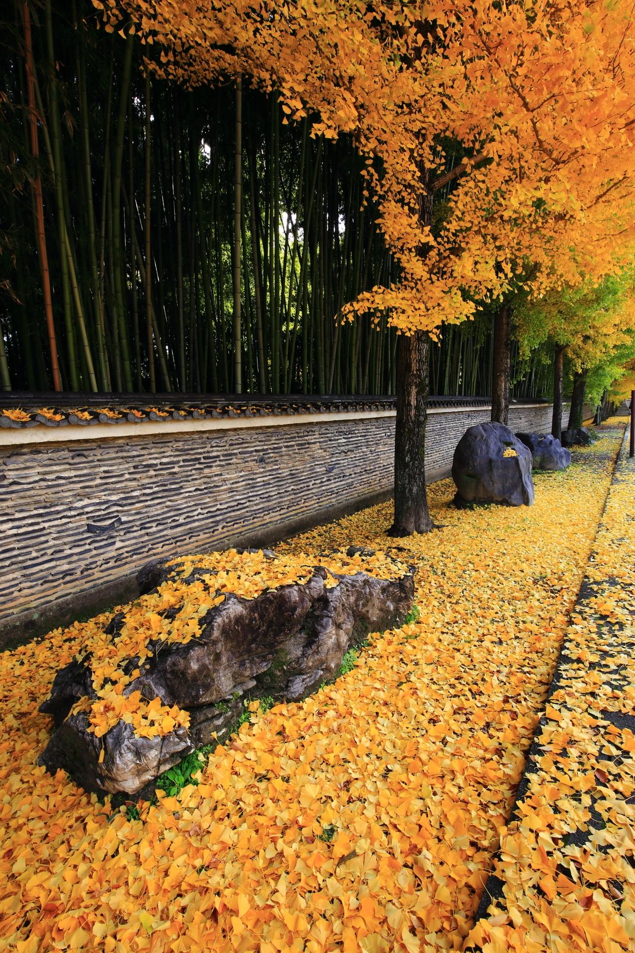 今宮神社の散り銀杏の黄色い絨毯