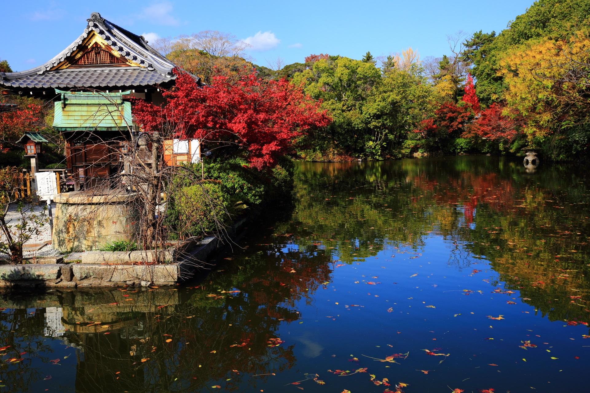 高画質 写真 神泉苑 紅葉