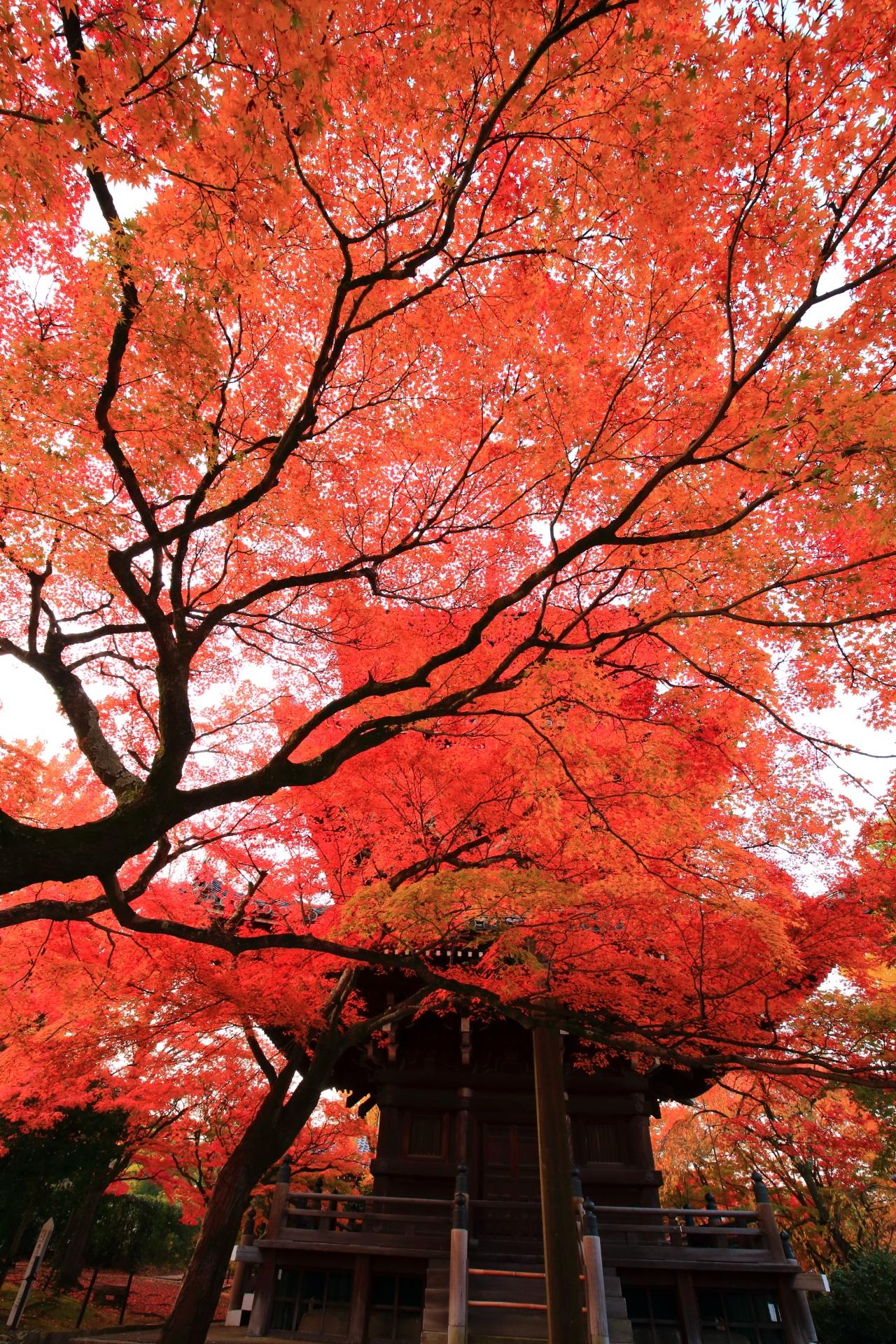 空と三重塔を覆うあっぱれな紅葉
